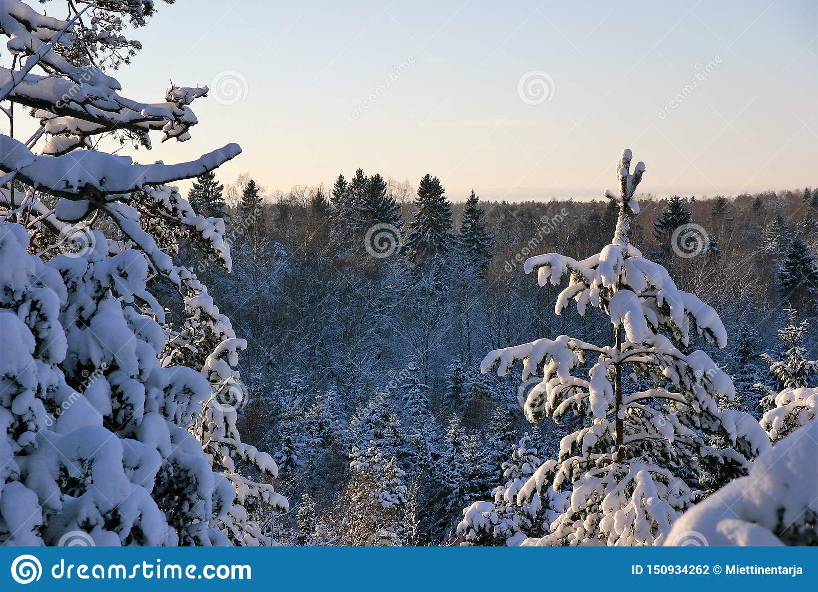 Χιονώδης, ηλιόλουστη και κρύα ημέρα στα ξύλα