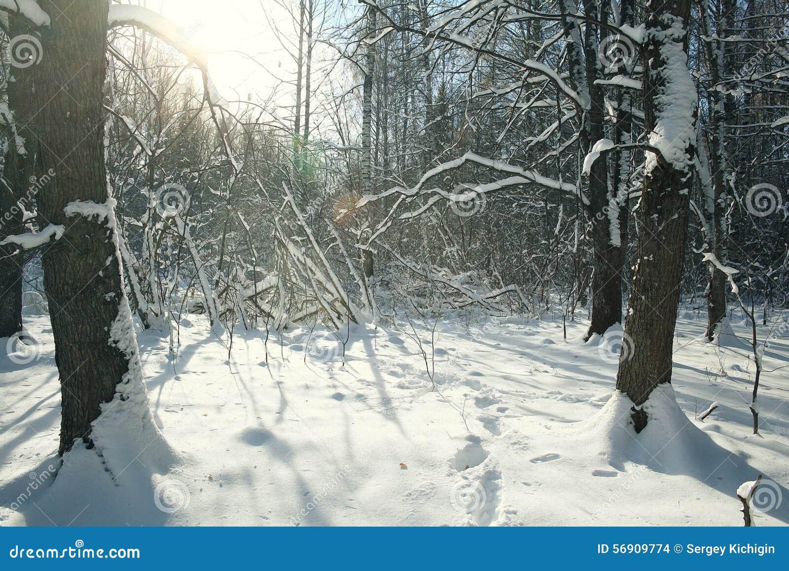 χιονώδες δασικό τοπίο