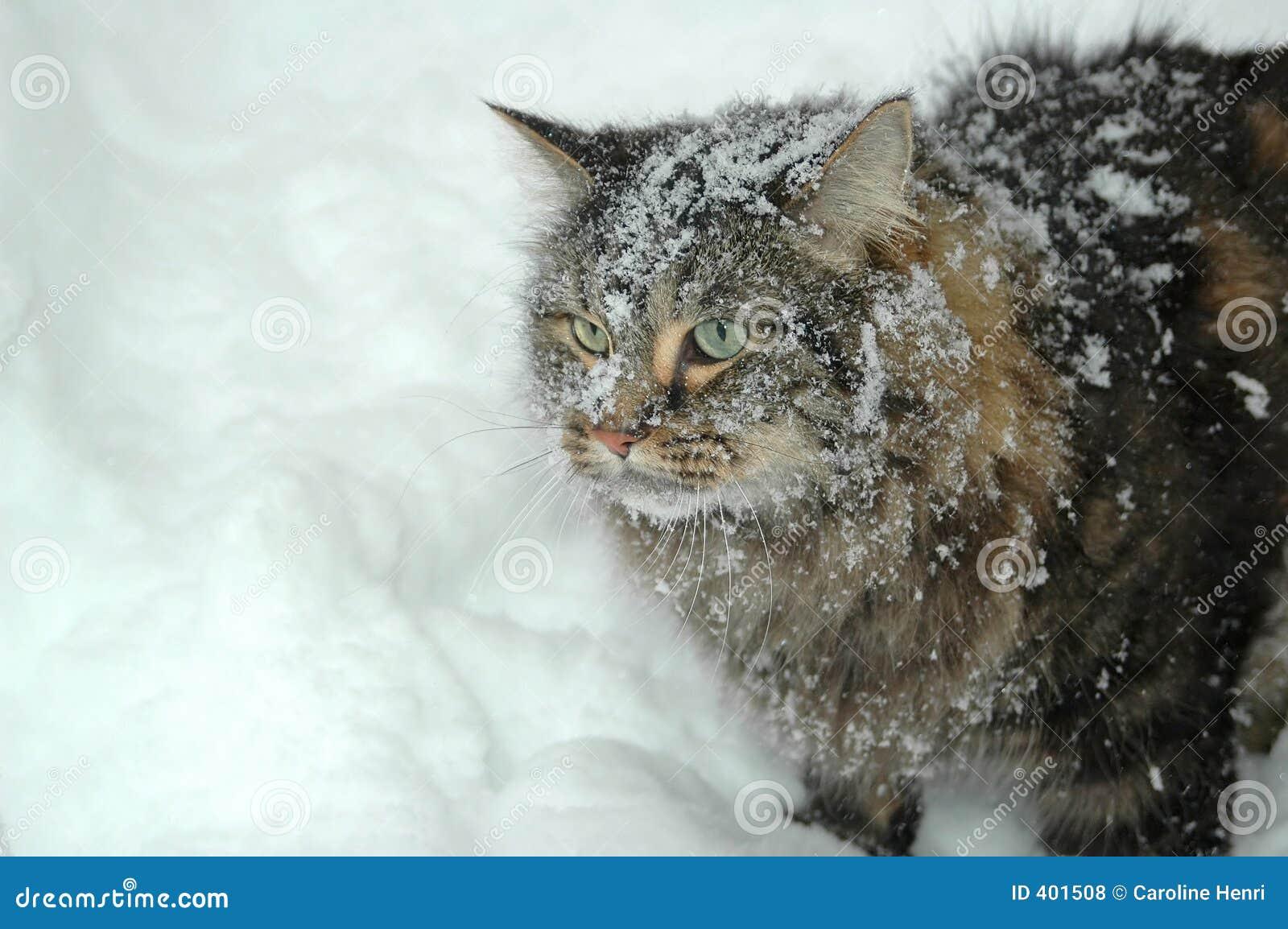 χιόνι γατών