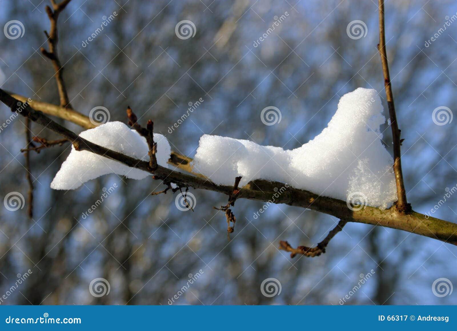 χιόνι κλάδων