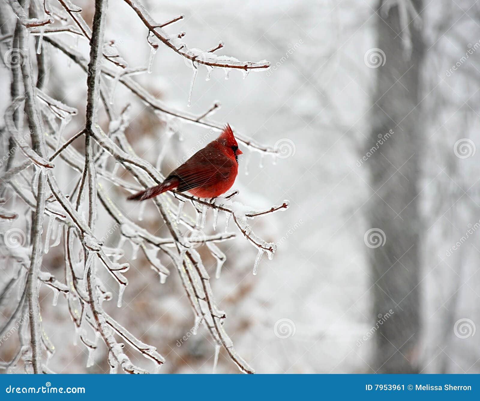 χιόνι πουλιών