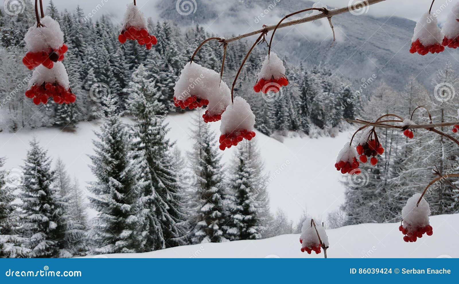 Χιόνι στα κόκκινα μούρα