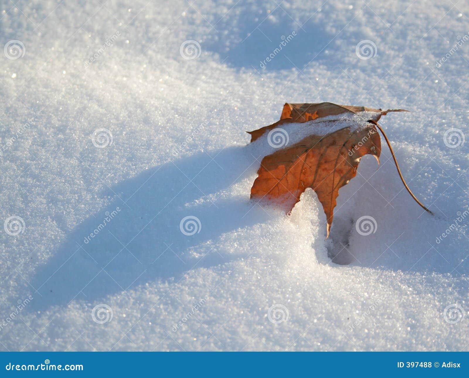 χιόνι φύλλων