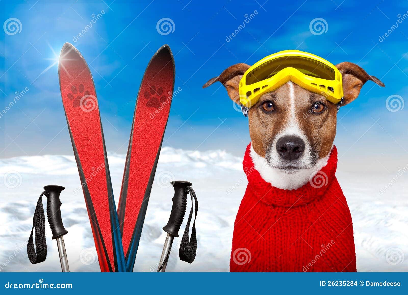 Χιόνι χειμερινών σκυλιών