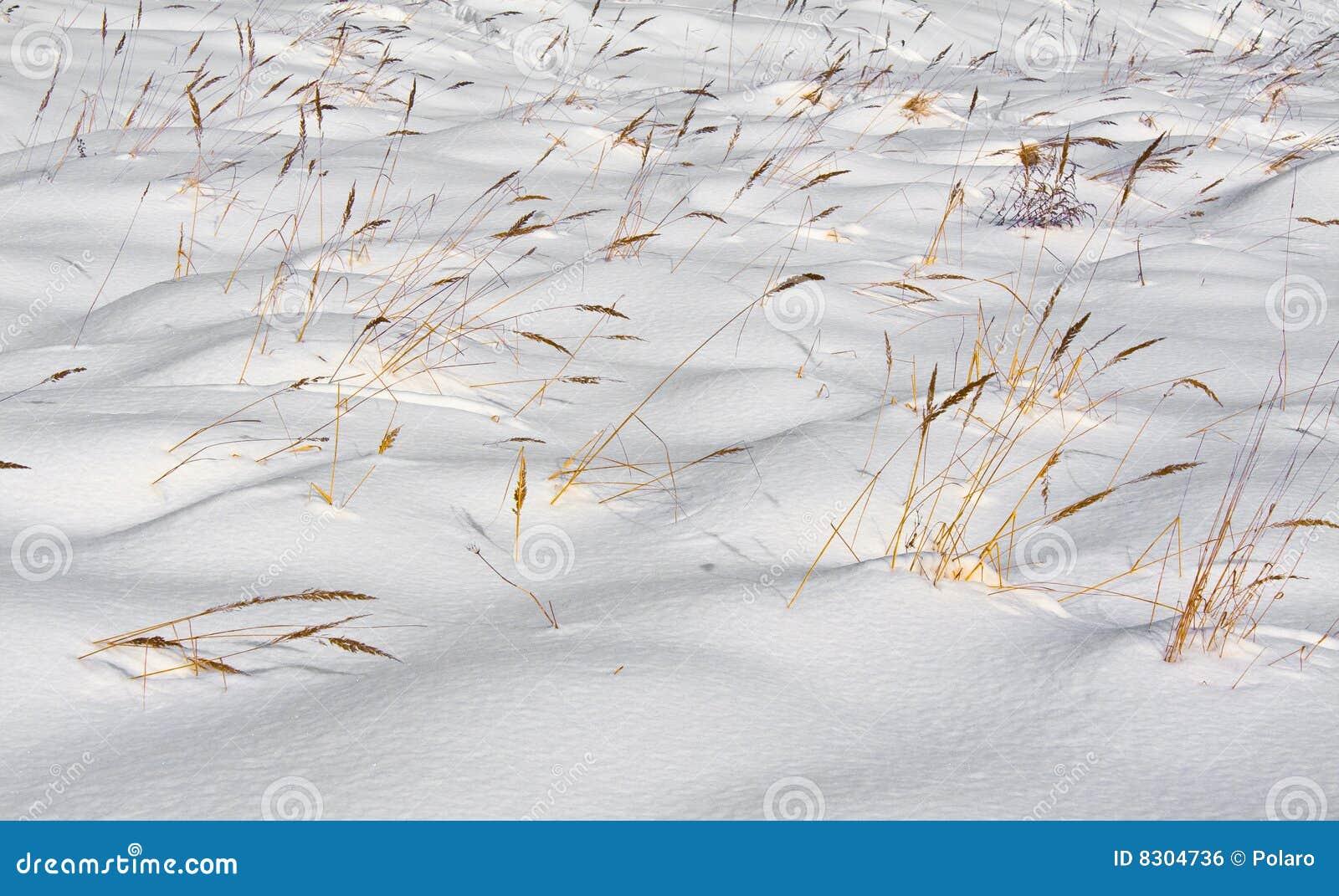 χιόνι χλόης