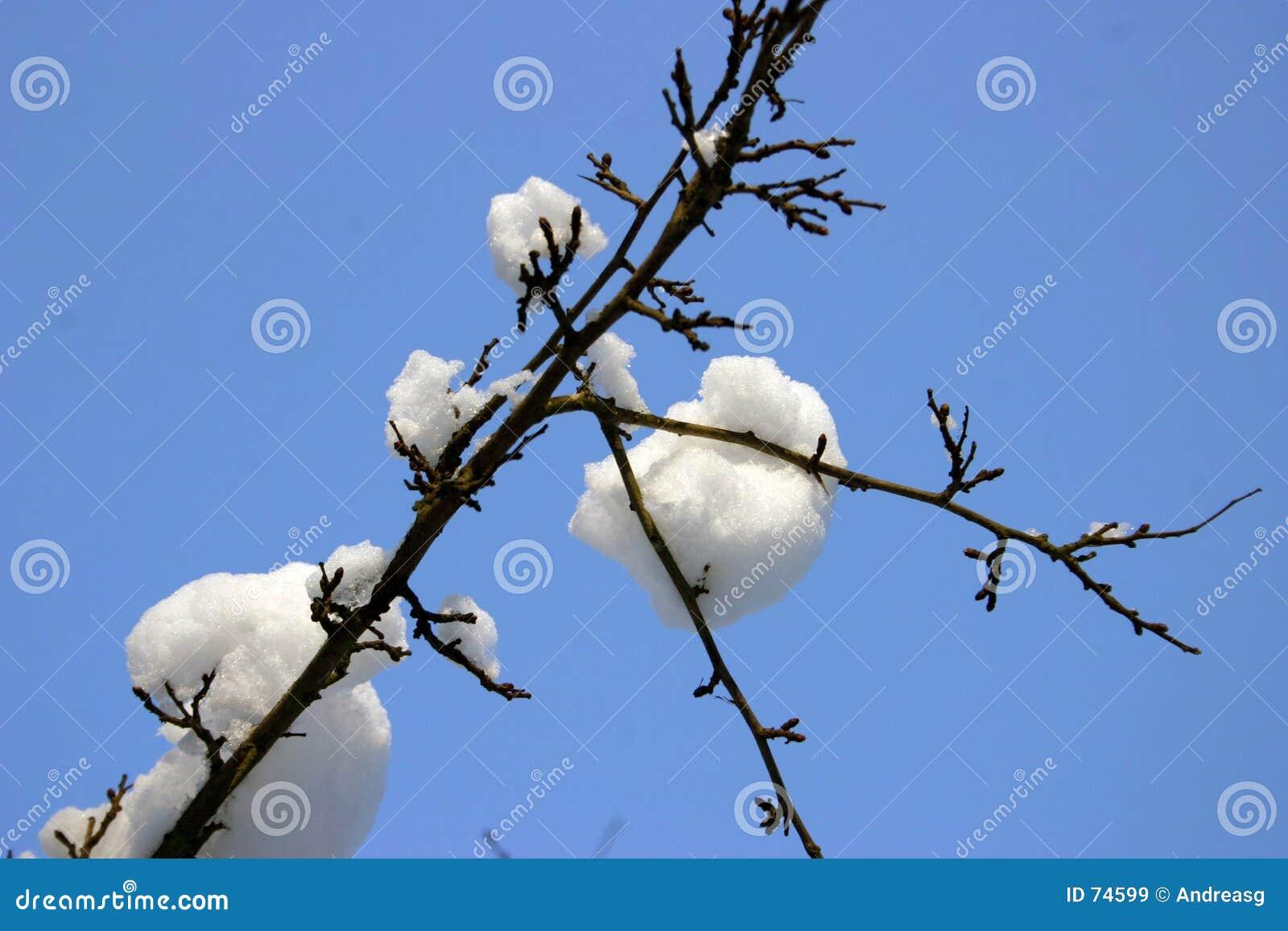 χιόνι 2 κλάδων