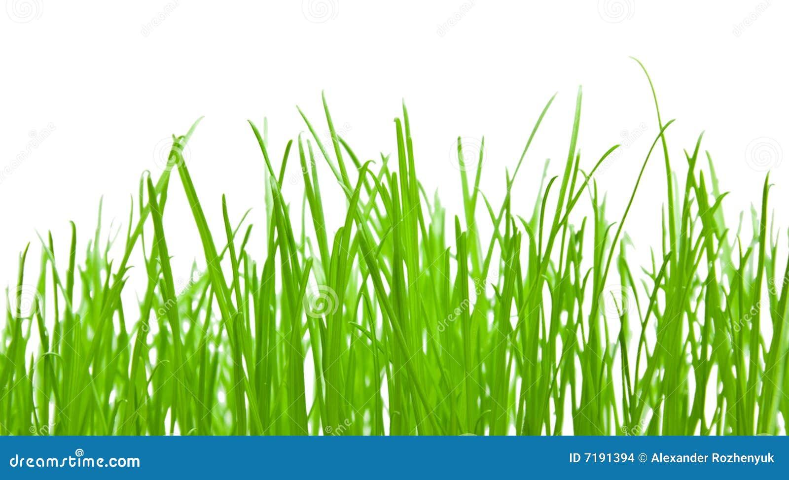 χλόη ανασκόπησης πράσινη