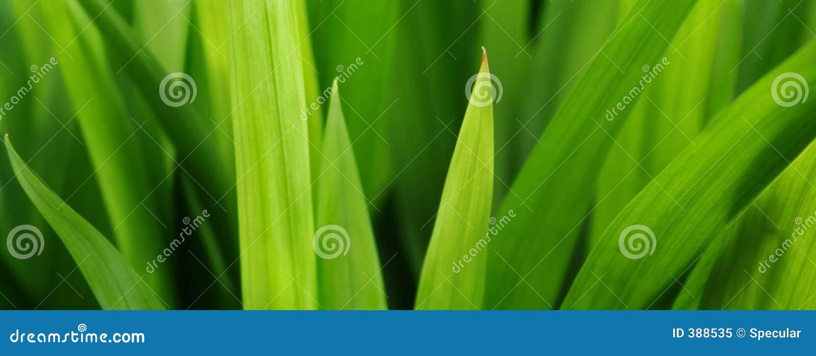 χλόη πιό πράσινη