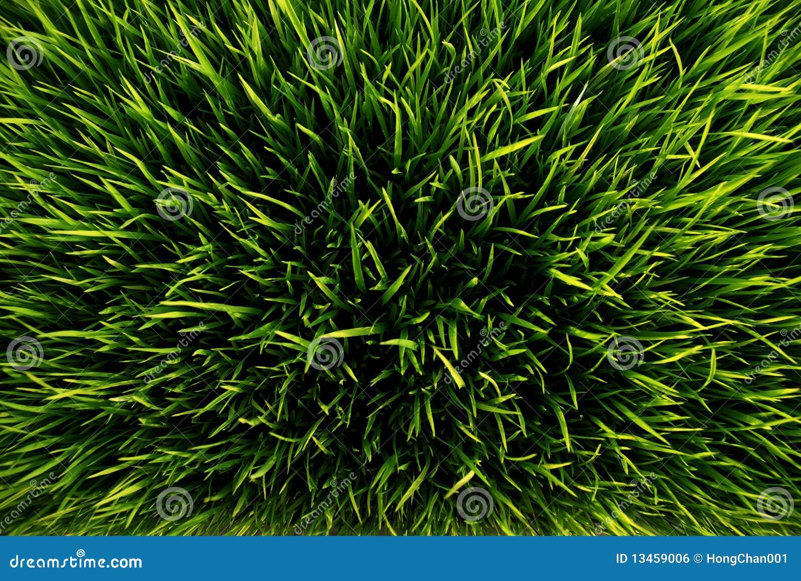 χλόη πράσινη