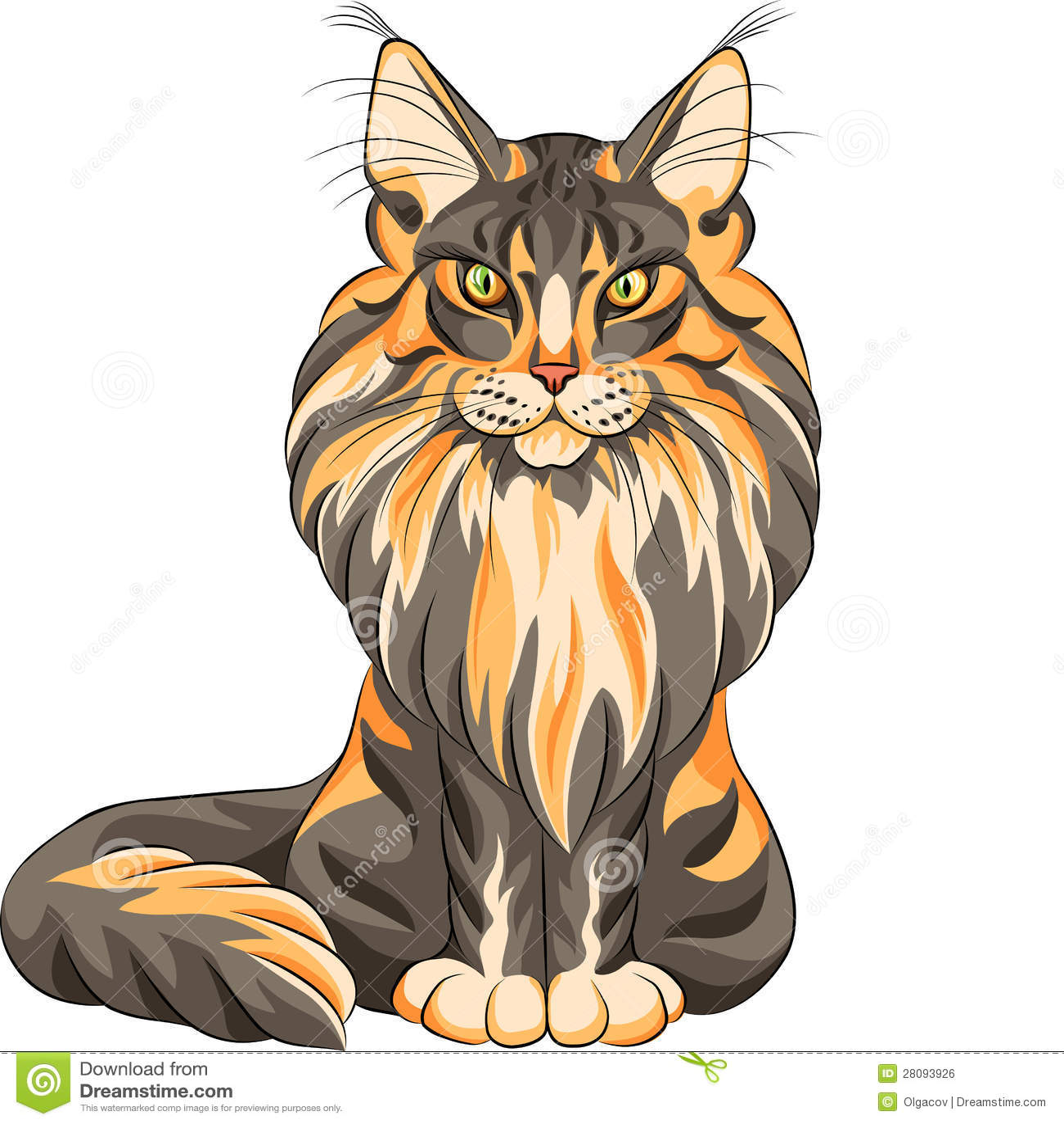 Χνουδωτή γάτα του Μαίην Coon