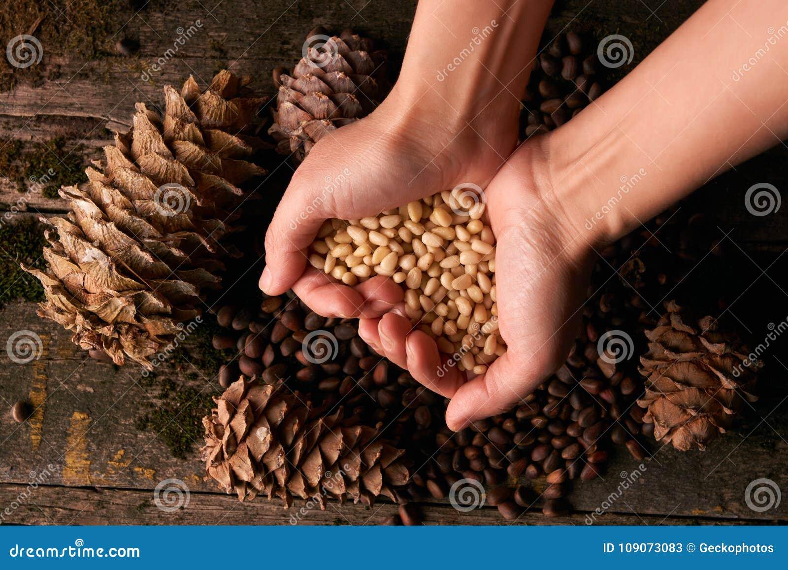 Χούφτα των πυρήνων καρυδιών πεύκων και των κώνων πεύκων κέδρων