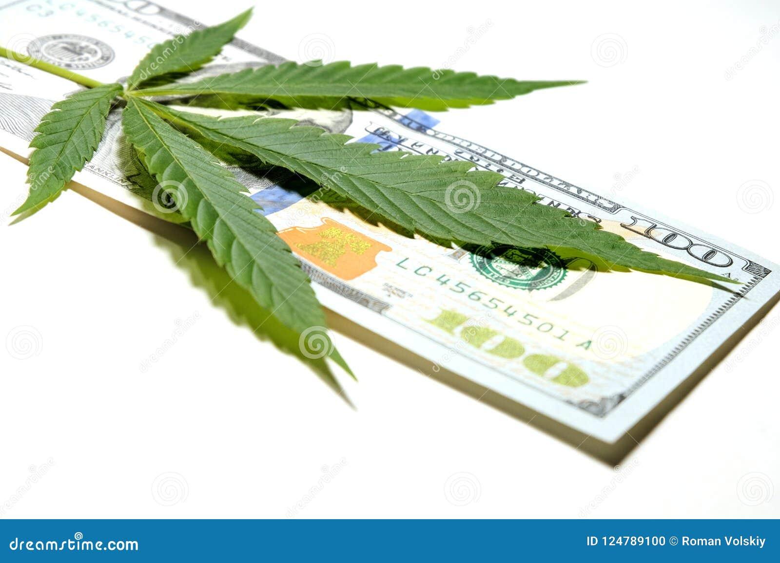 Χρήματα και μαριχουάνα Το φύλλο καννάβεων βρίσκεται στο λογαριασμό εκατό δολαρίων πεδίο βάθους ρηχό Η έννοια της εμπορίας ναρκωτι