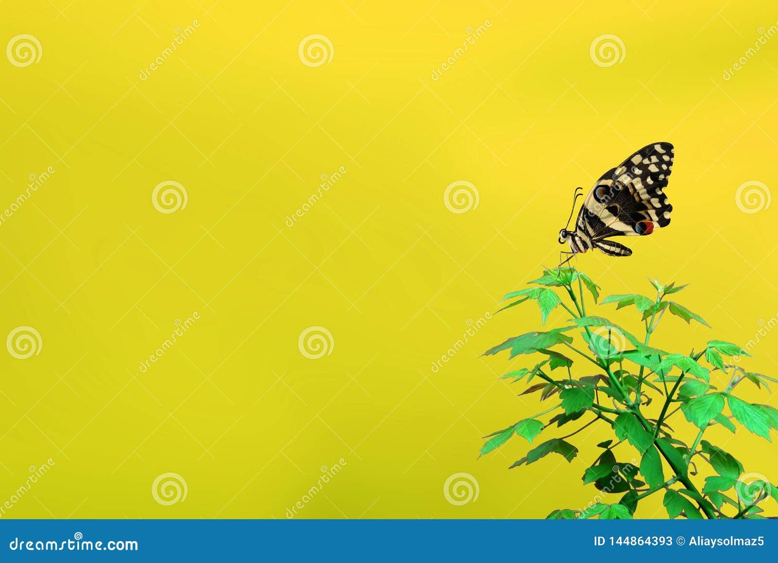 Χρονική έννοια άνοιξη, όμορφη πεταλούδα και κενή περιοχή για το κείμεν