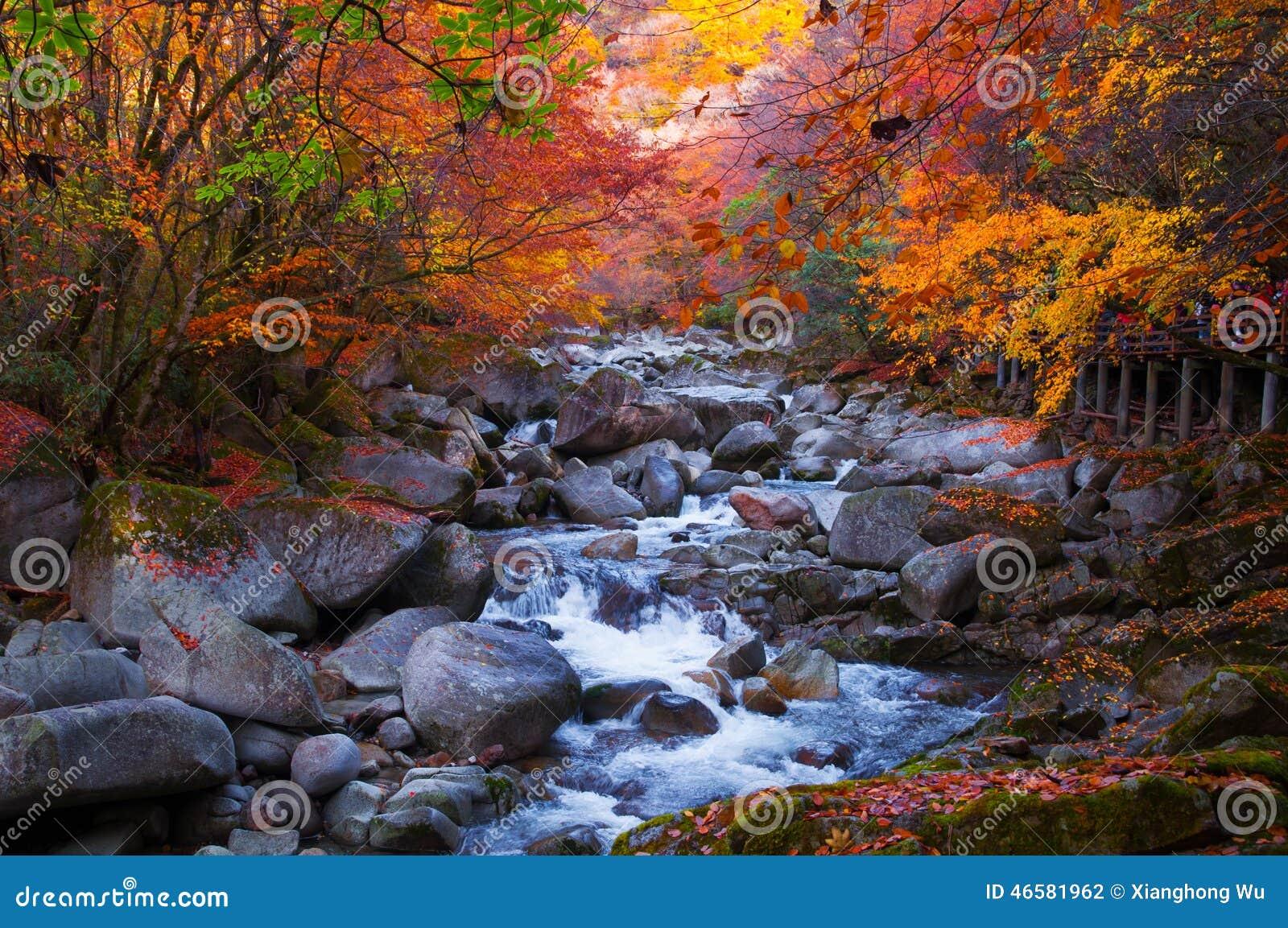 Χρυσά δάσος και ρεύμα πτώσης