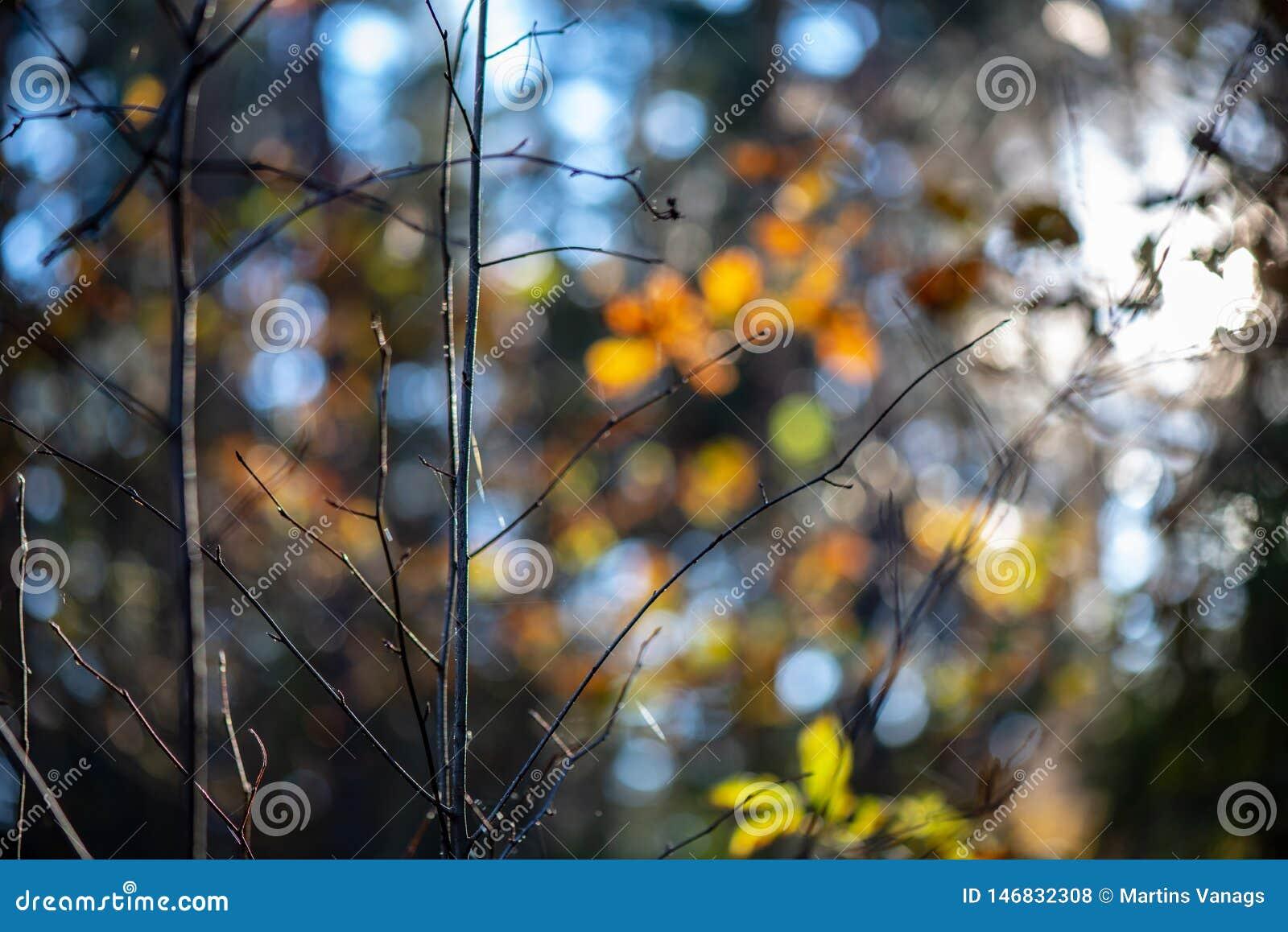 χρυσά χρωματισμένα φύλλα φθινοπώρου με τους κλάδους υποβάθρου και δέντρων θαμπάδων
