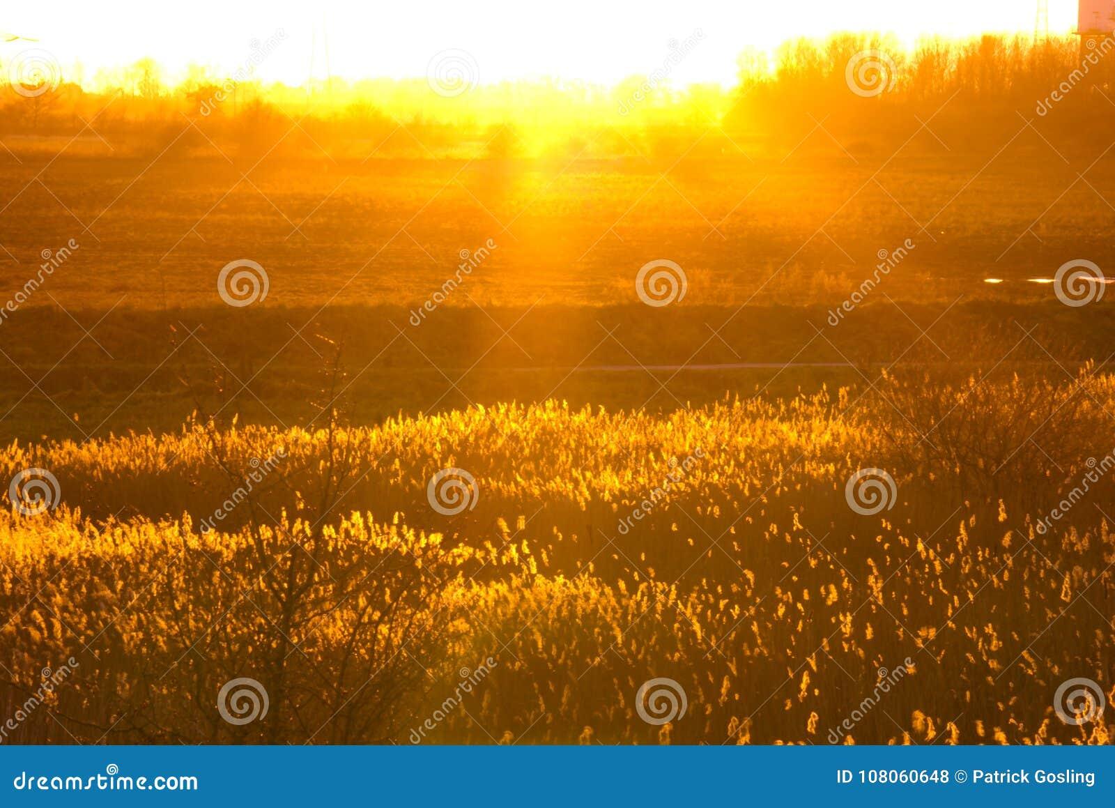 Χρυσά χρώματα του ήλιου βραδιού