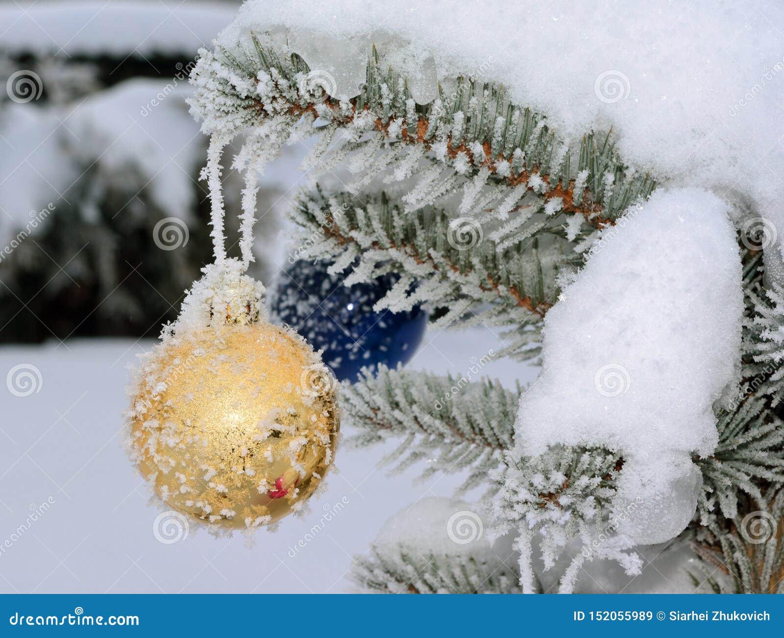 Χρυσή νέα σφαίρα έτους ζωντανό fir-tree με τον παγετό και το χιόνι