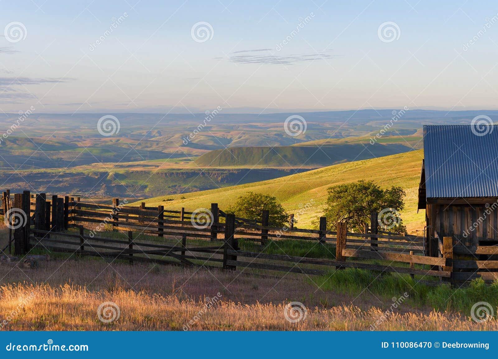 Χρυσή ώρα στο αγρόκτημα βουνών του Ντάλλας στο κράτος λόφων της Κολούμπια