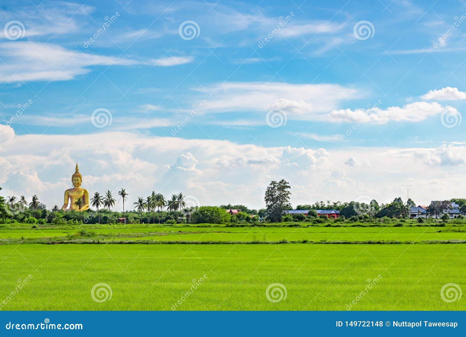 Χρυσός μεγάλος τομέας του Βούδα και ρυζιού