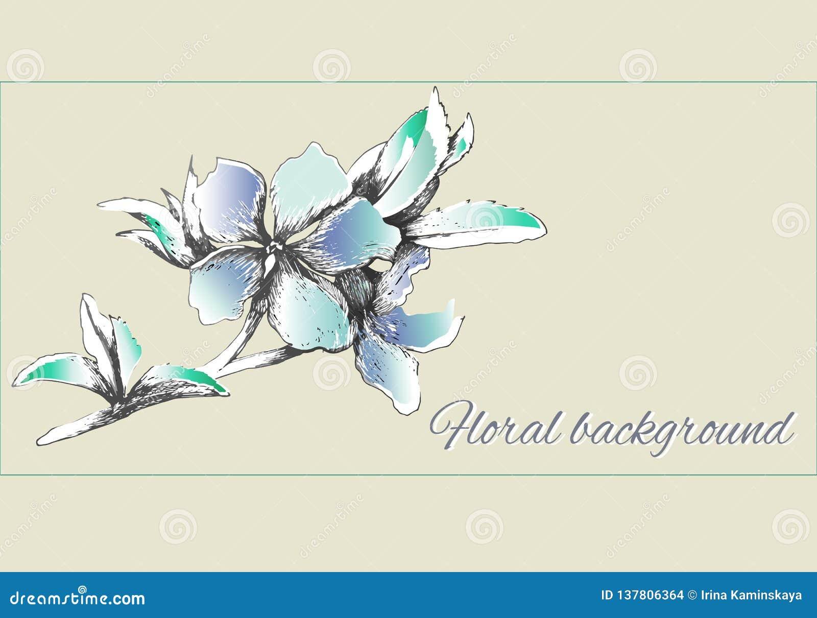 Χρωματισμένα διανυσματικά λουλούδια στα ευγενή ανοικτό μπλε χρώματα Watercolor λουλουδιών περιγράμματος άνοιξη