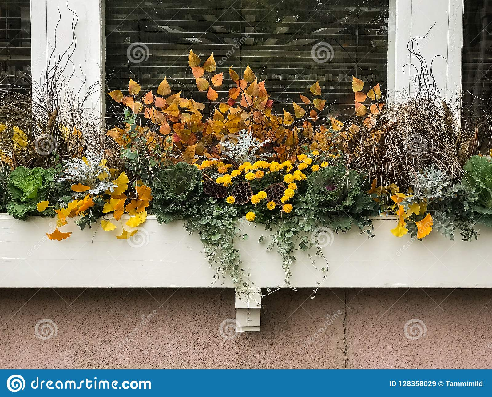 Χρωματισμένα φθινόπωρο λουλούδια στο ξύλινο κιβώτιο λουλουδιών