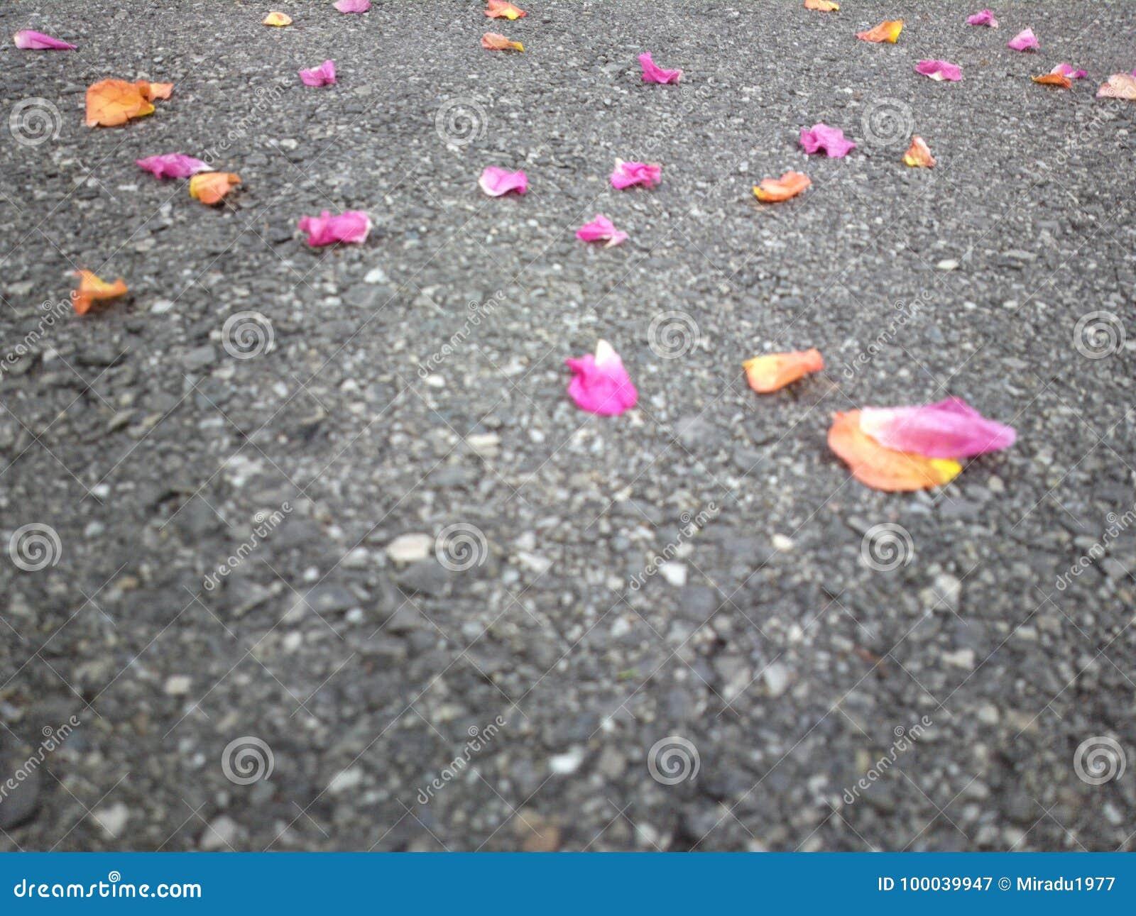 Χρωματισμένα φύλλα στο έδαφος