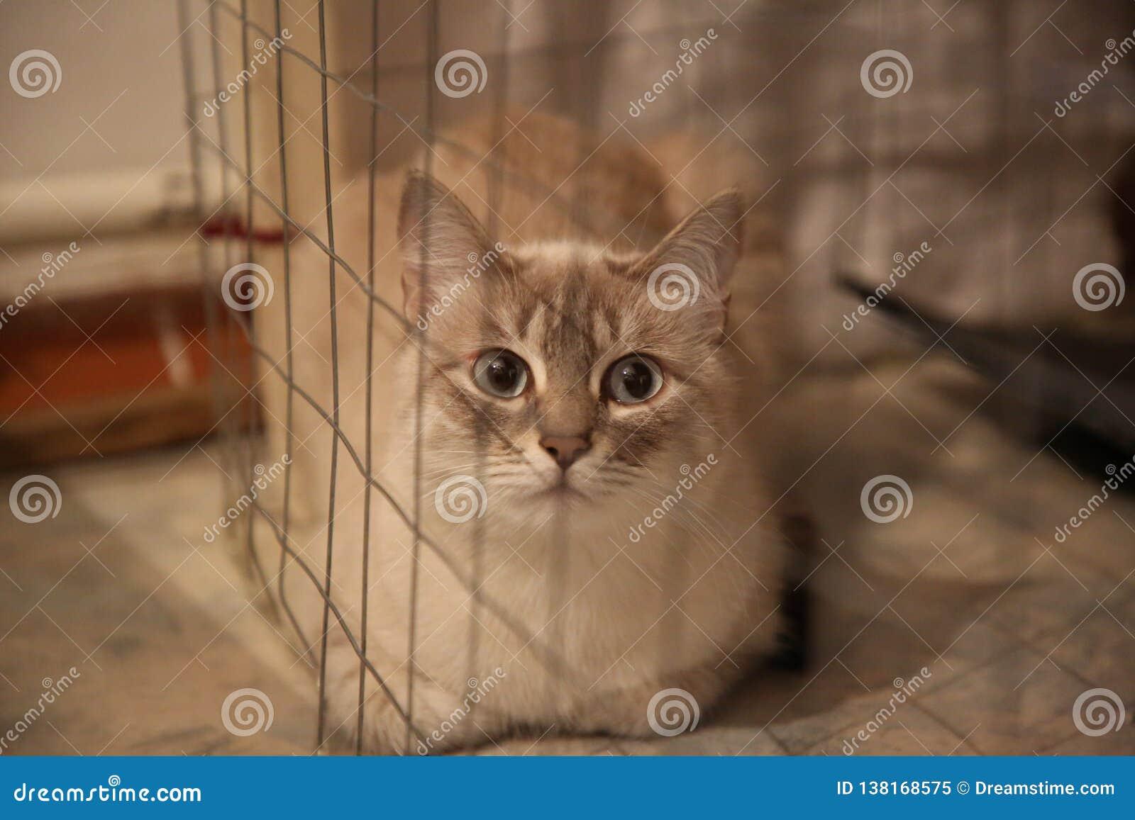 Χρωματισμένη tabbi γάτα μεταμφιέσεων Neva seames behaind το δίχτυ σε ένα κλουβί