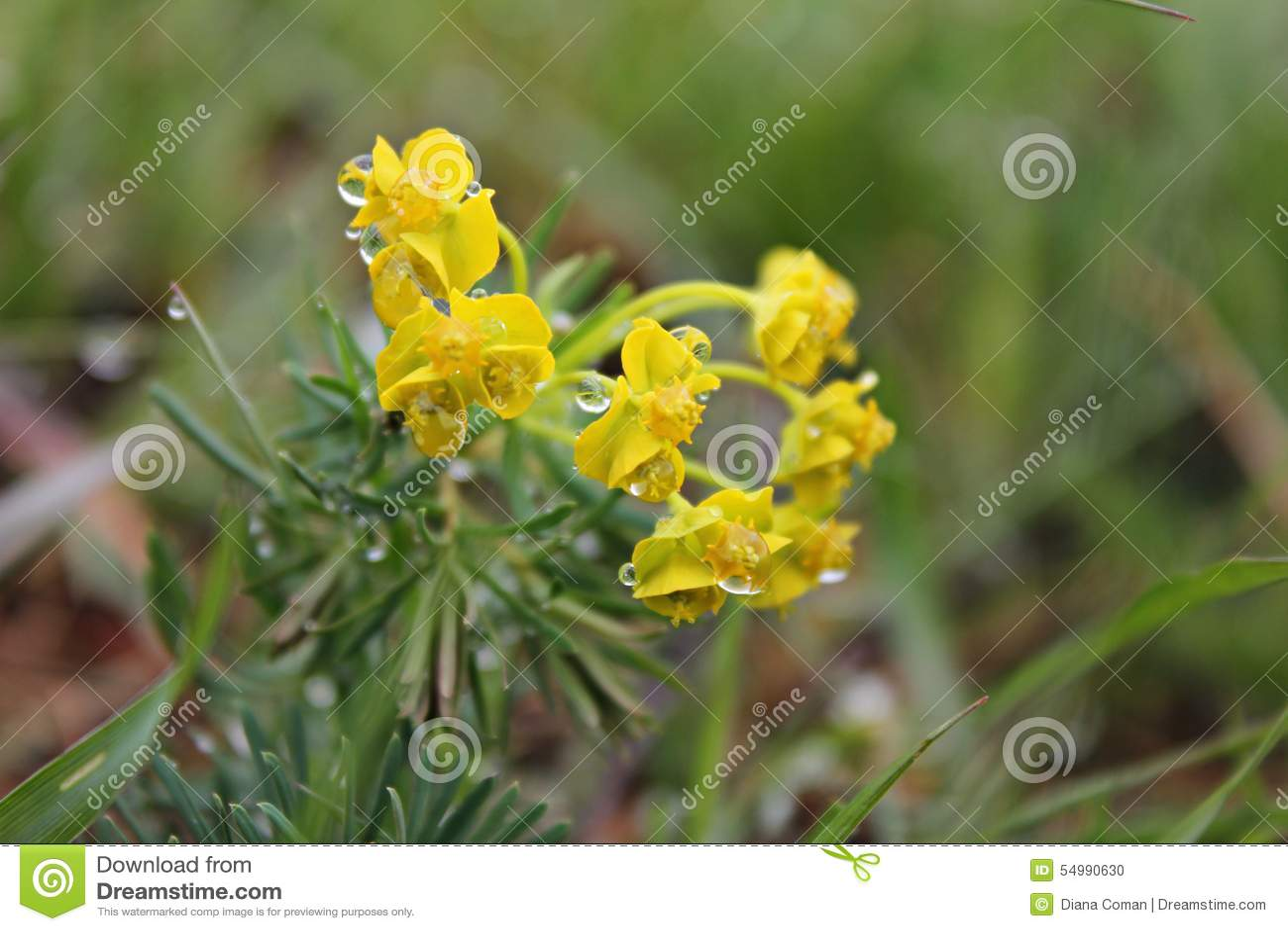 Χρόνος άνοιξη - κίτρινα λουλούδια