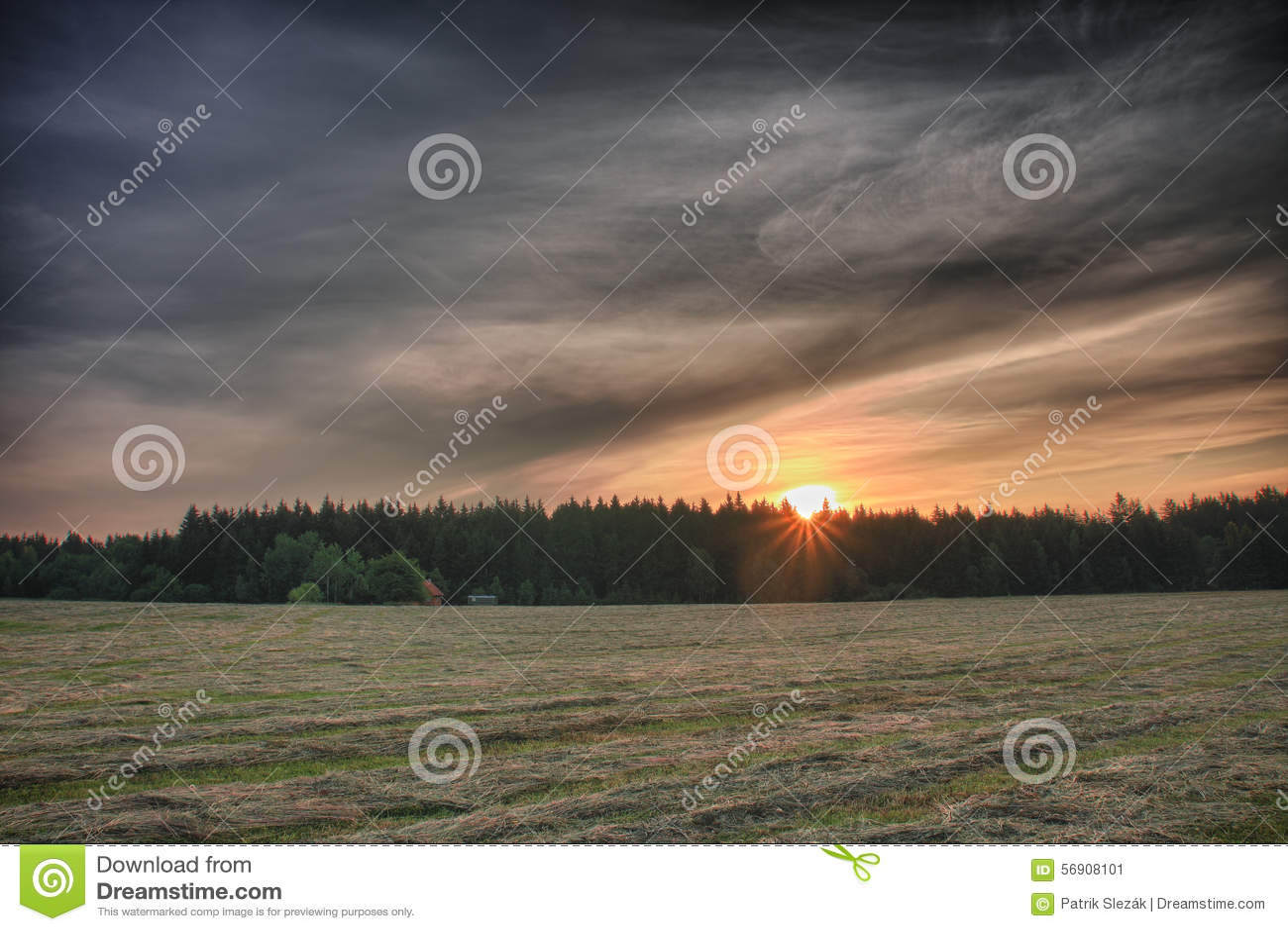 Χρόνος ανατολής το θερινό πρωί, λιβάδι με την κομμένη χλόη, δασικό α