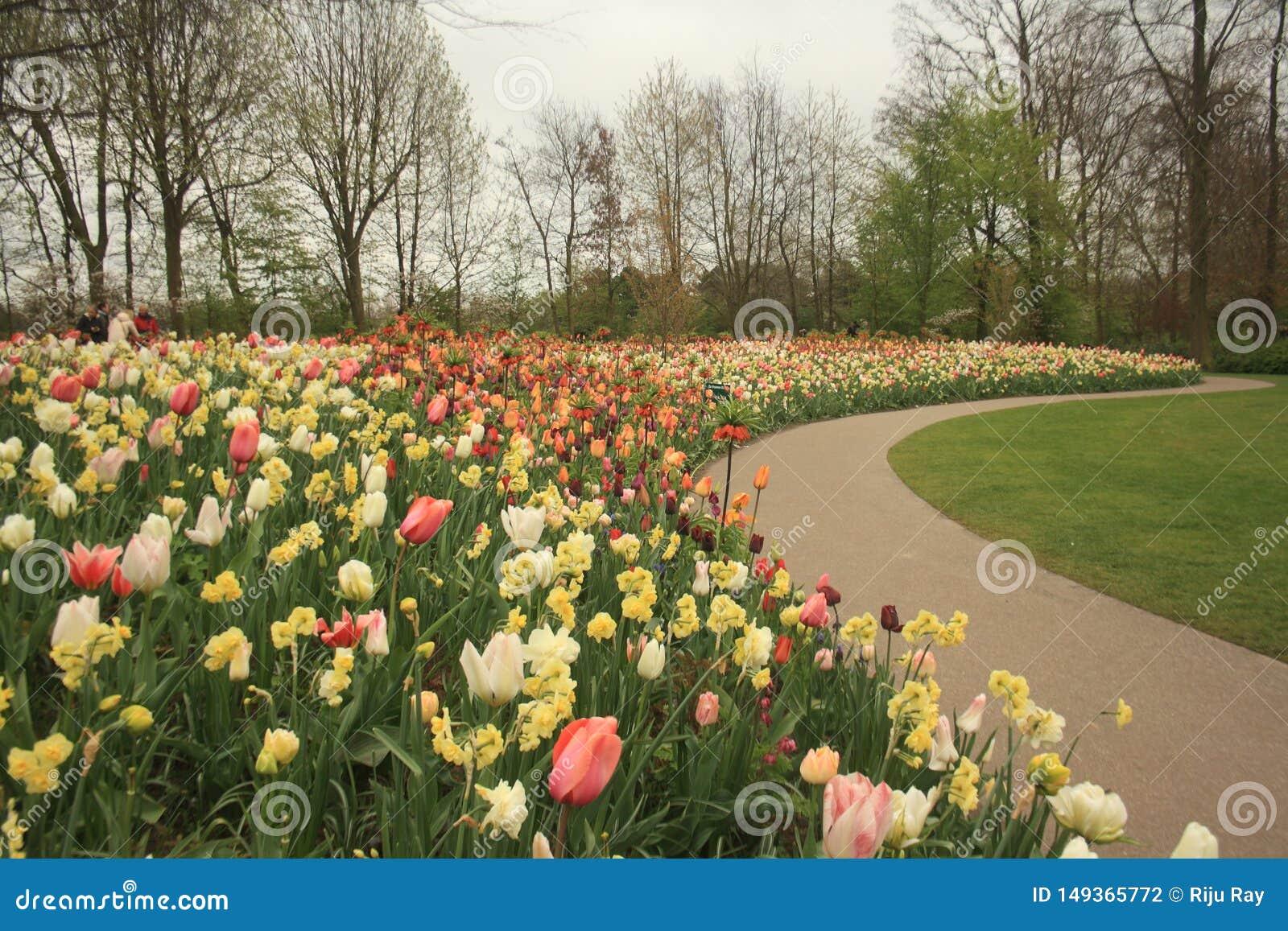 Χρώματα της φύσης