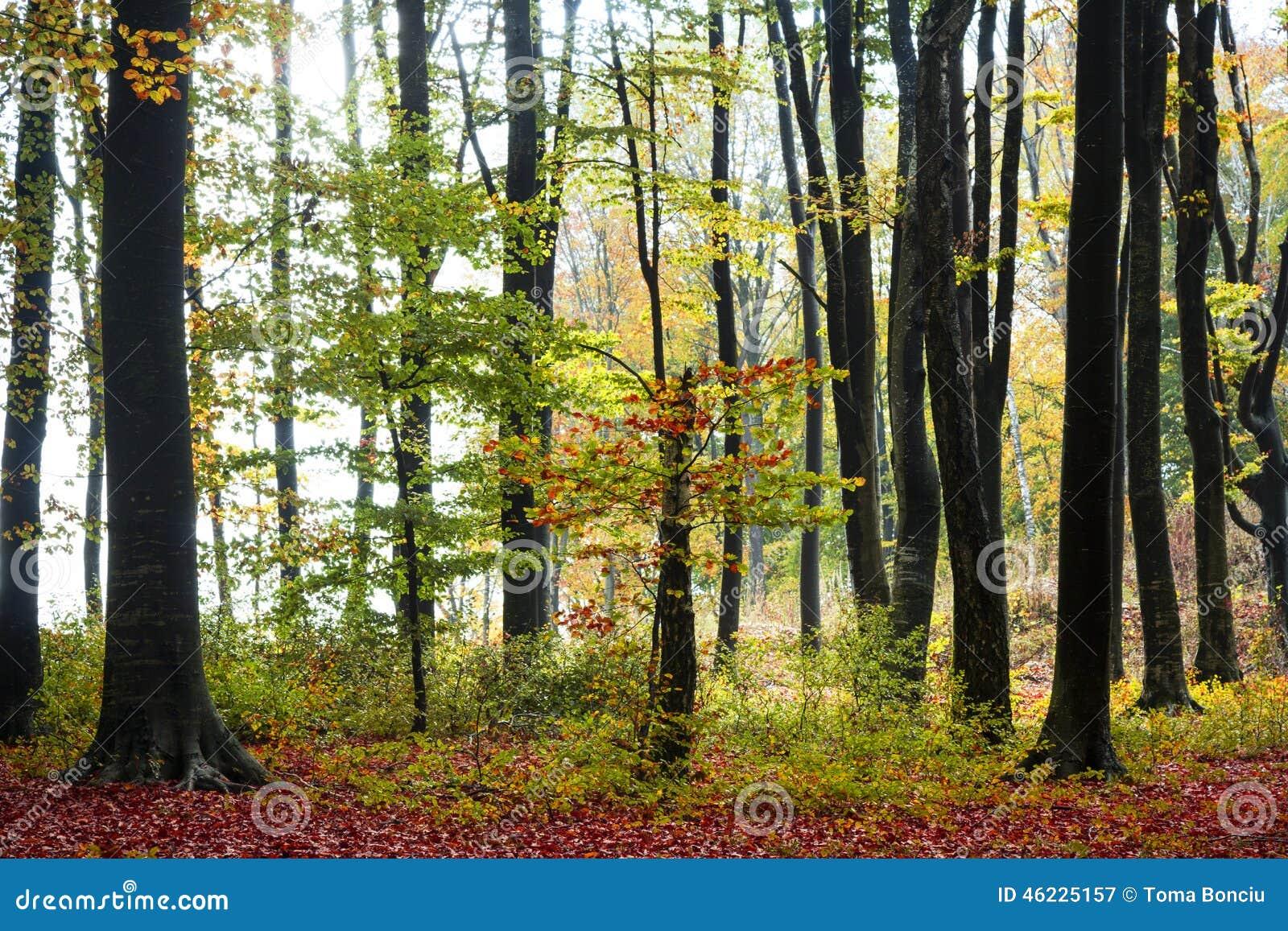 Χρώματα του φθινοπώρου
