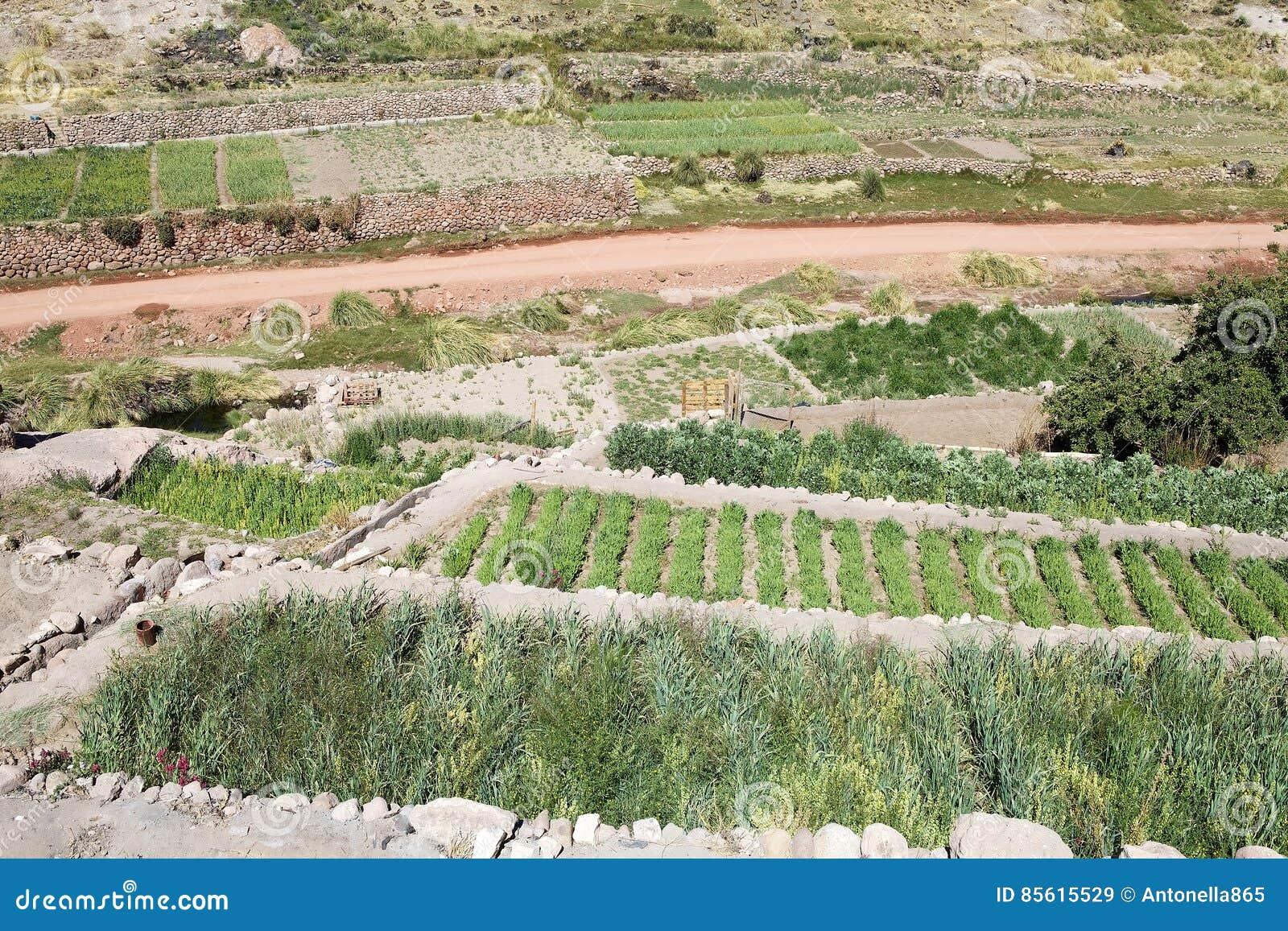Χωριό Caspana, Χιλή