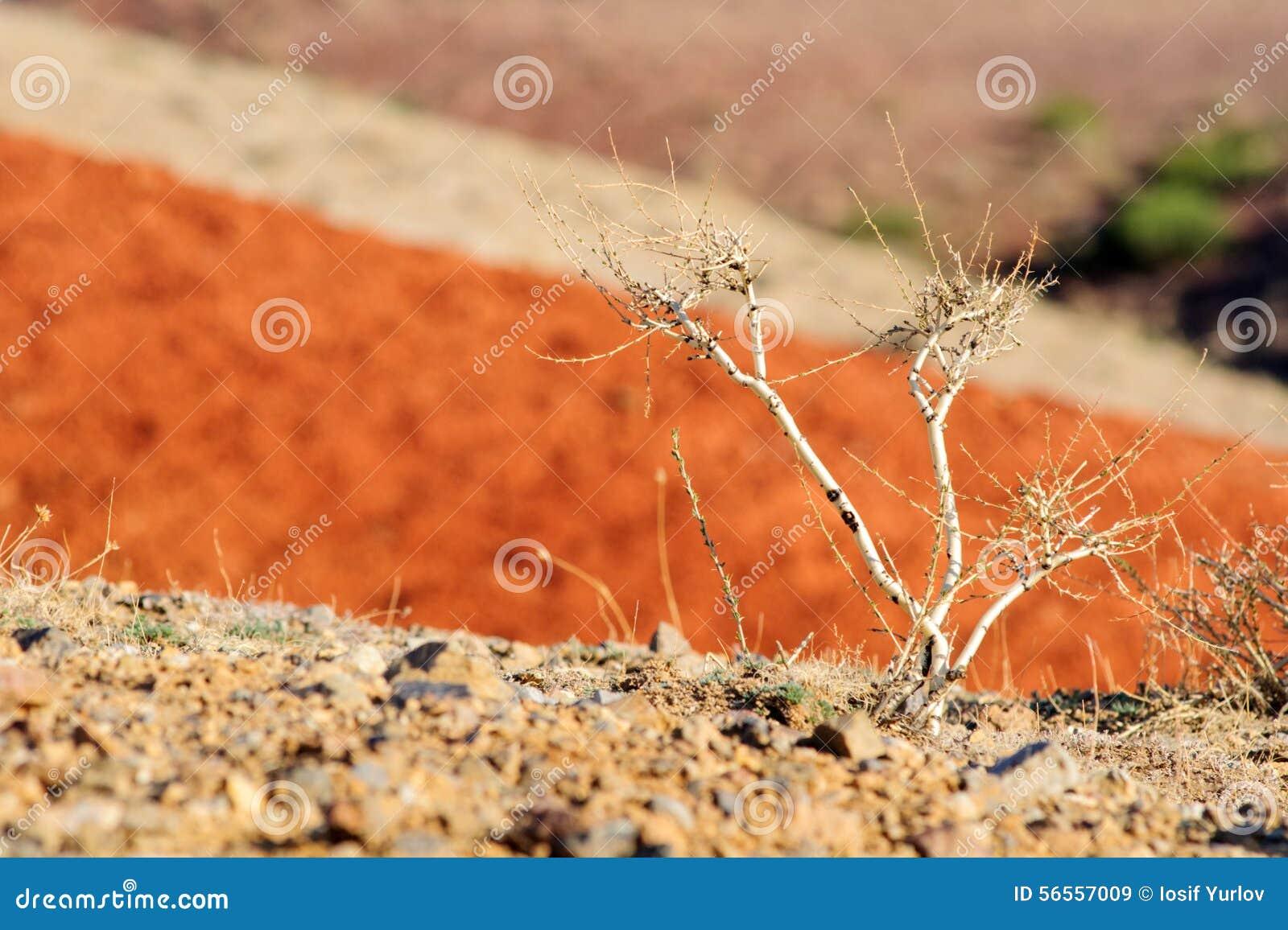 Download Χώμα χρώματος των καταθέσεων υδραργύρου Στοκ Εικόνα - εικόνα από φύση, λιβάδι: 56557009