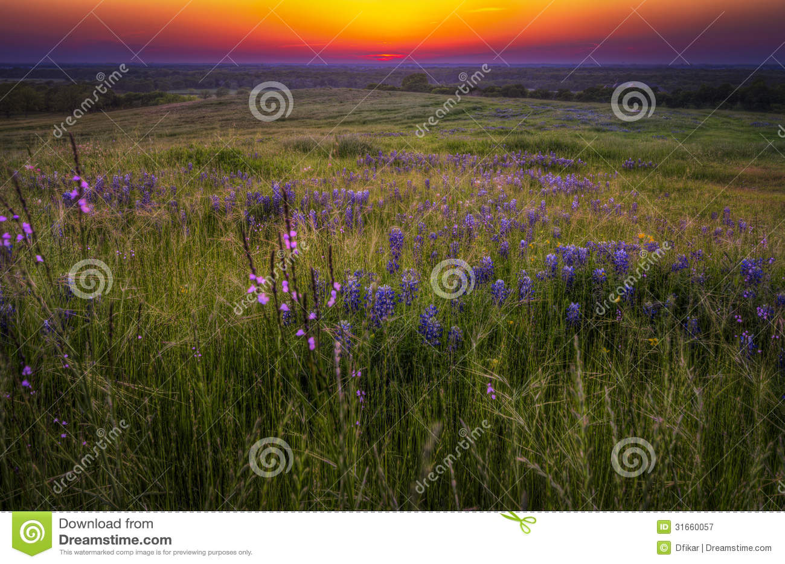 Χλόες και Bluebonnets στο ηλιοβασίλεμα