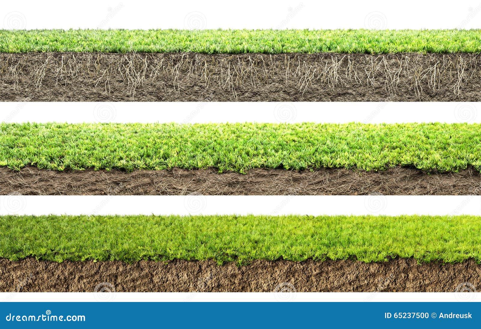Χλόη με τις ρίζες και το χώμα