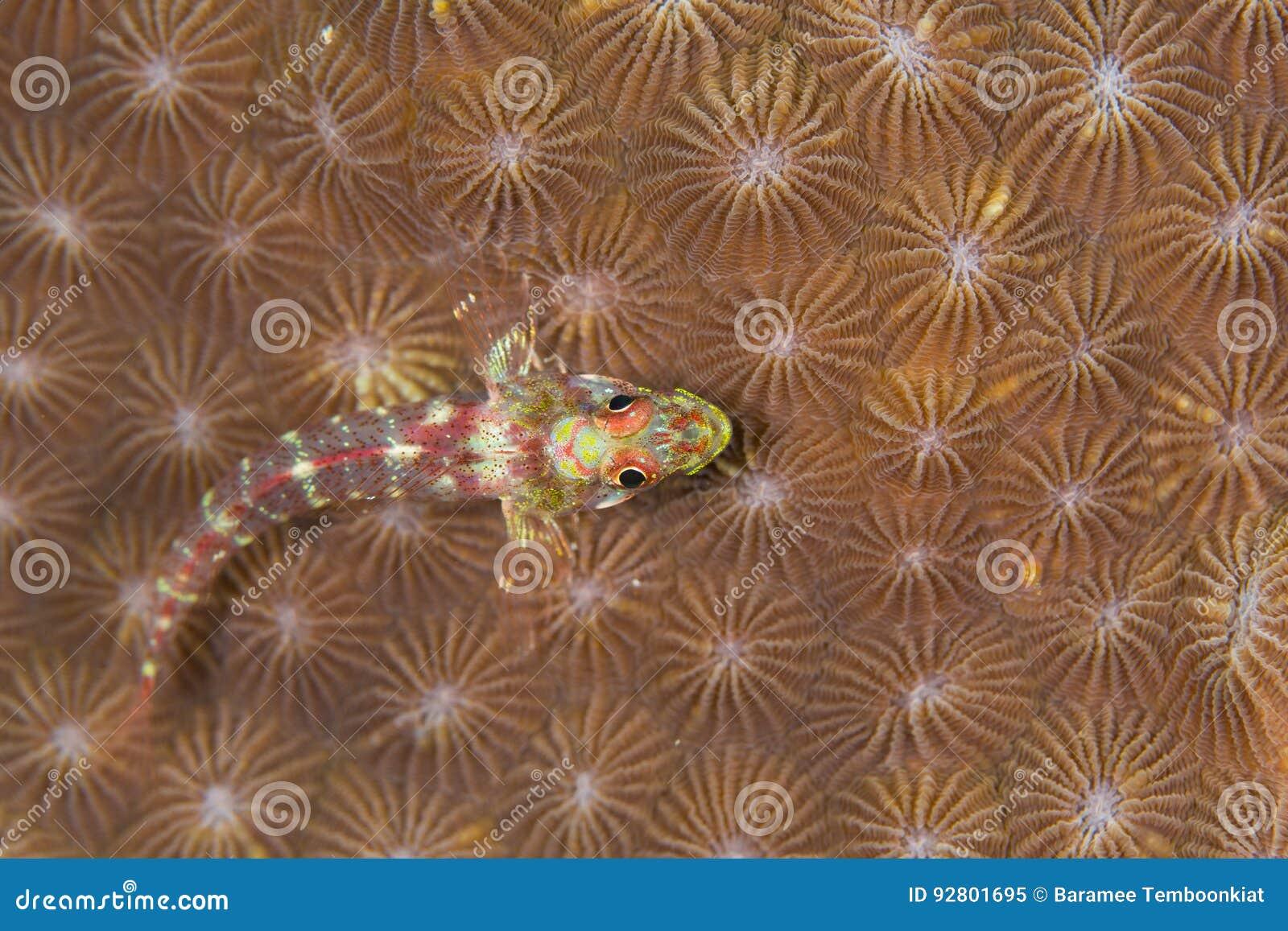 ψάρια μικρά