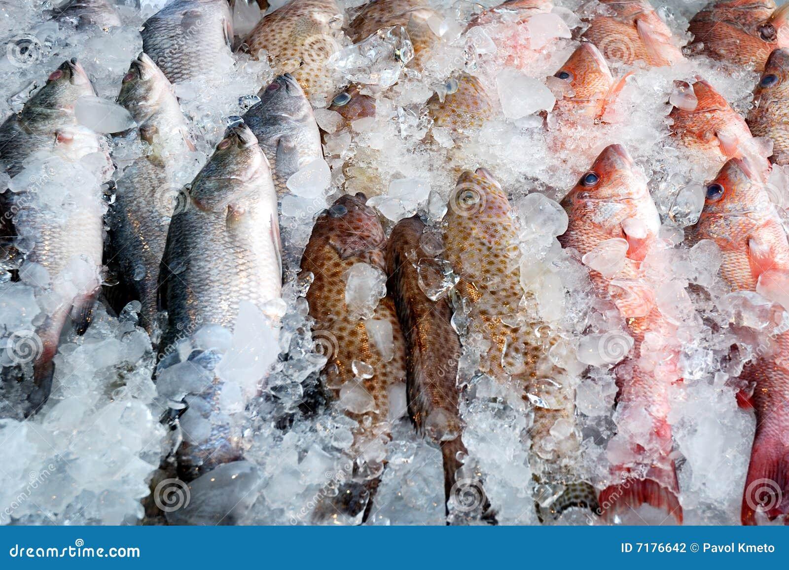 ψάρια παγωμένα
