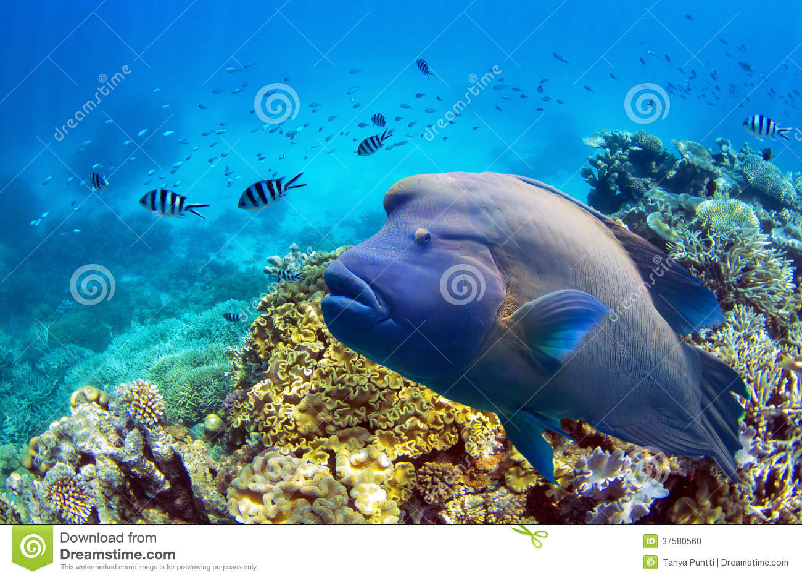Ψάρια στο μεγάλο σκόπελο εμποδίων
