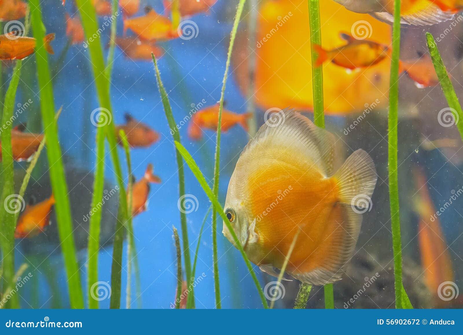 Ψάρια στο acquarium