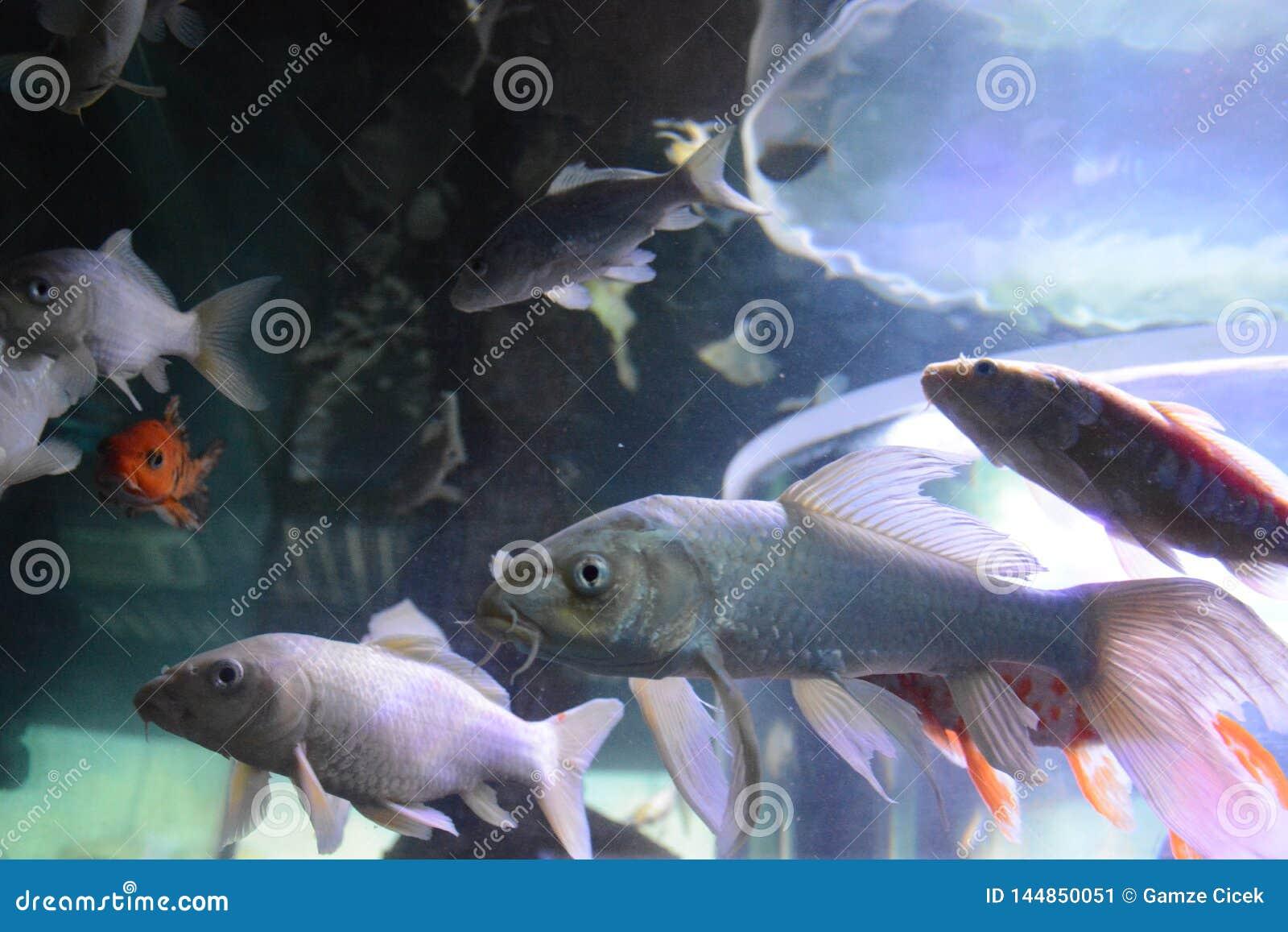 Ψάρια στο aguarium