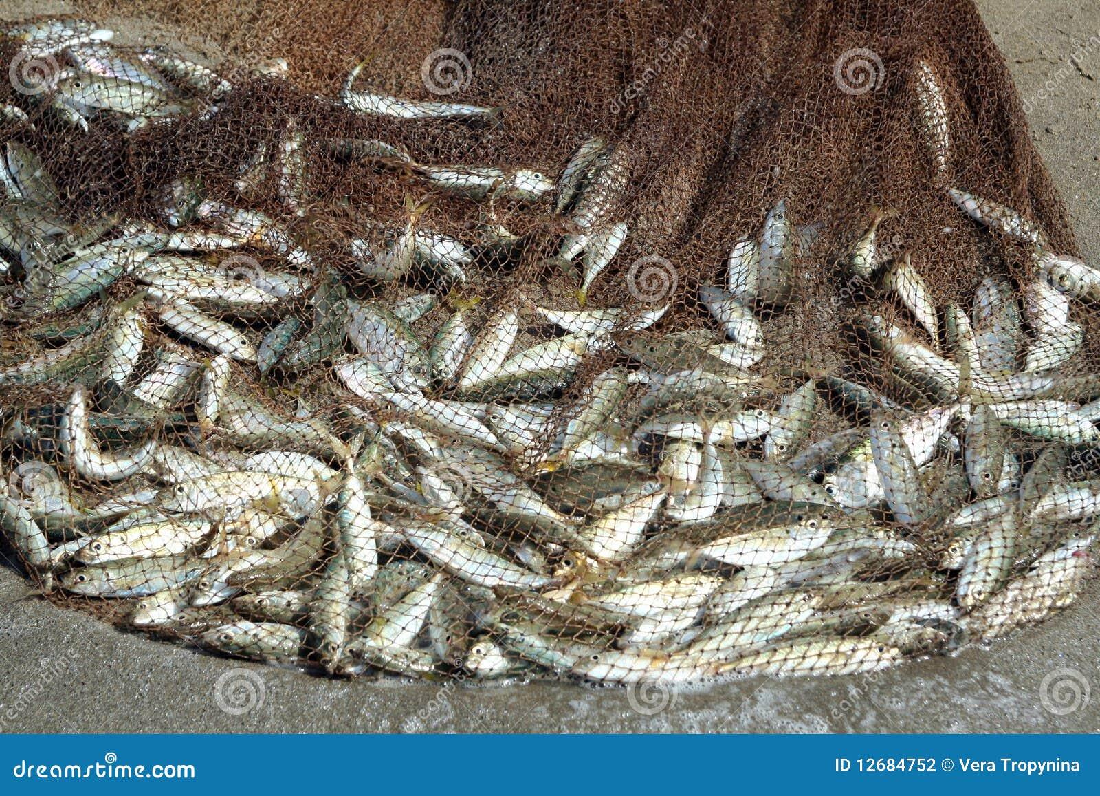 ψάρια σύλληψης