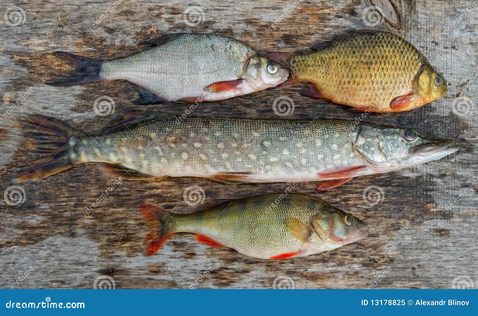 ψάρια του γλυκού νερού