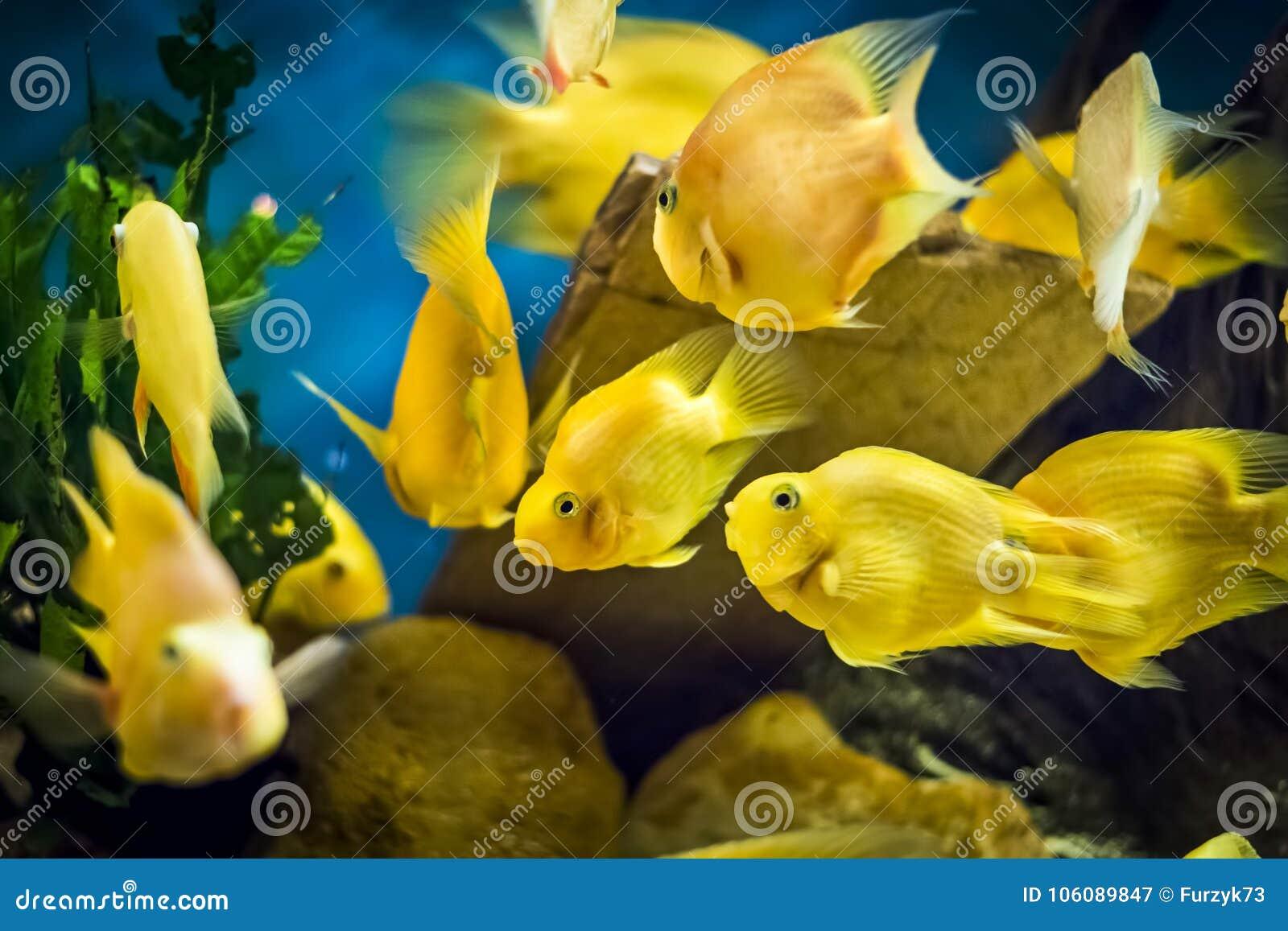 Αποτέλεσμα εικόνας για ενυδρειο με ψαρια