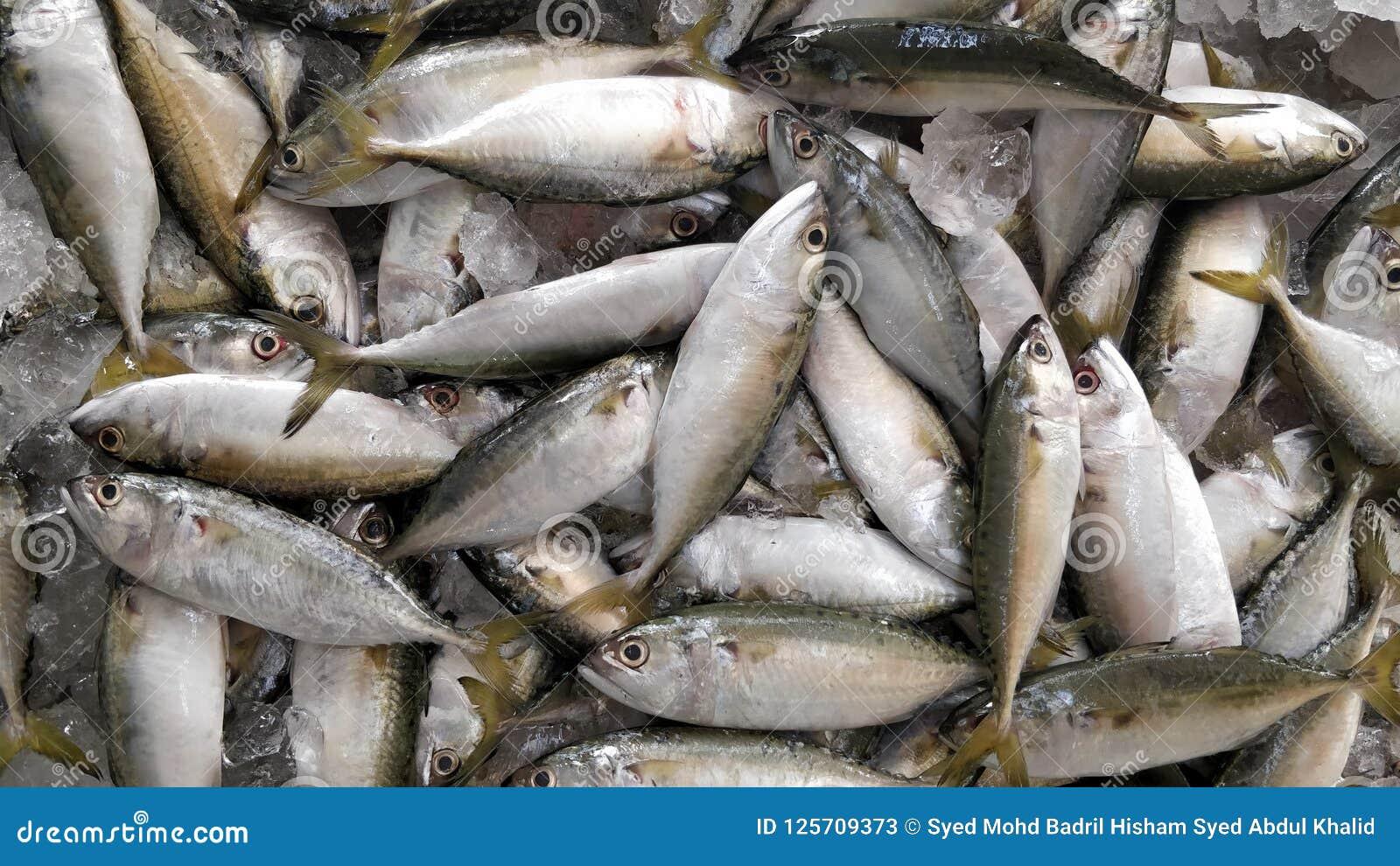 Ψάρια kembung στην αγορά