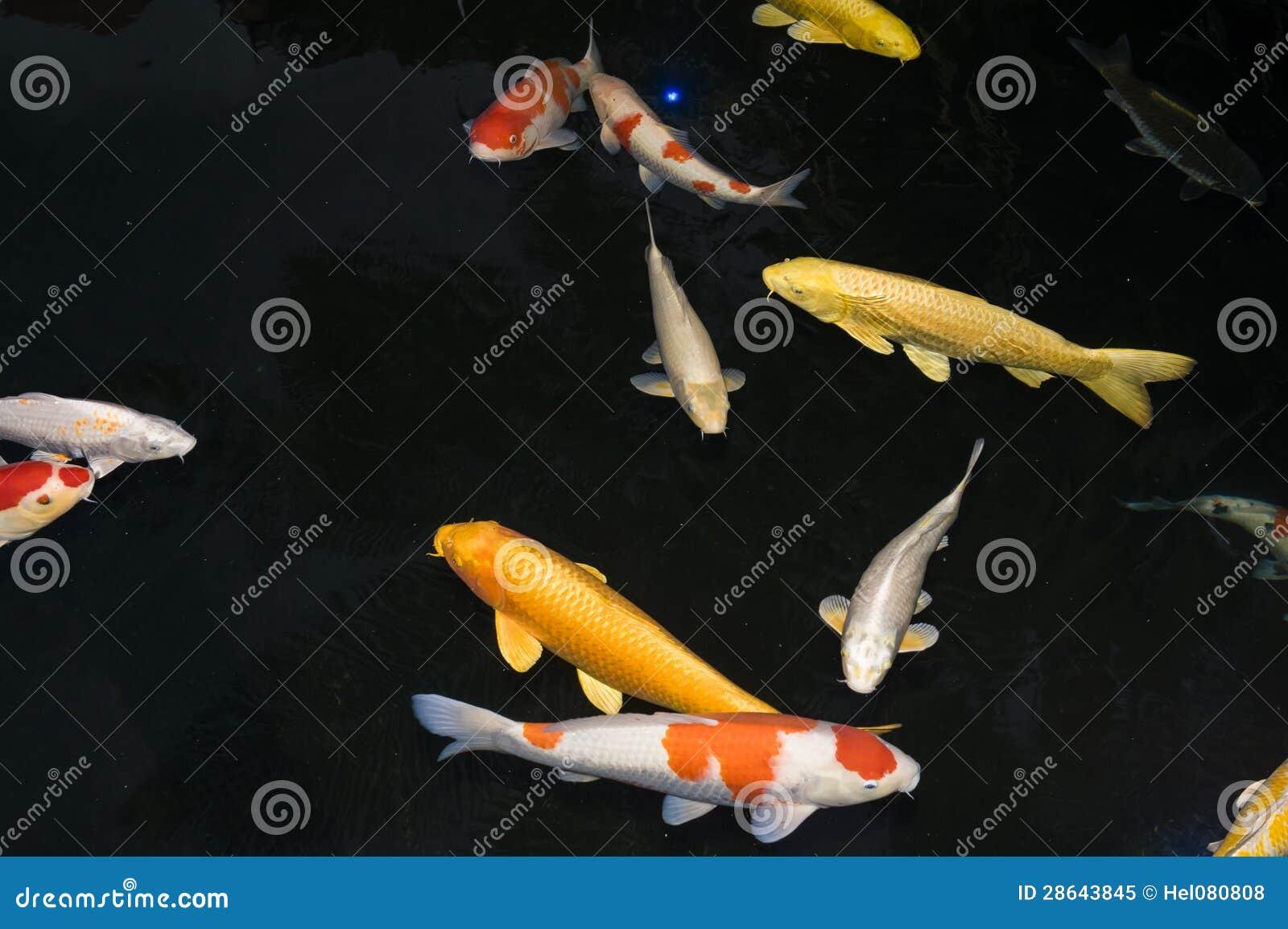 Ψάρια Koi