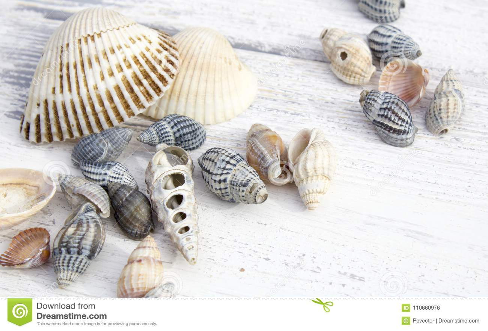 ψαλιδίζοντας απομονωμένο λευκό κοχυλιών θάλασσας μονοπατιών
