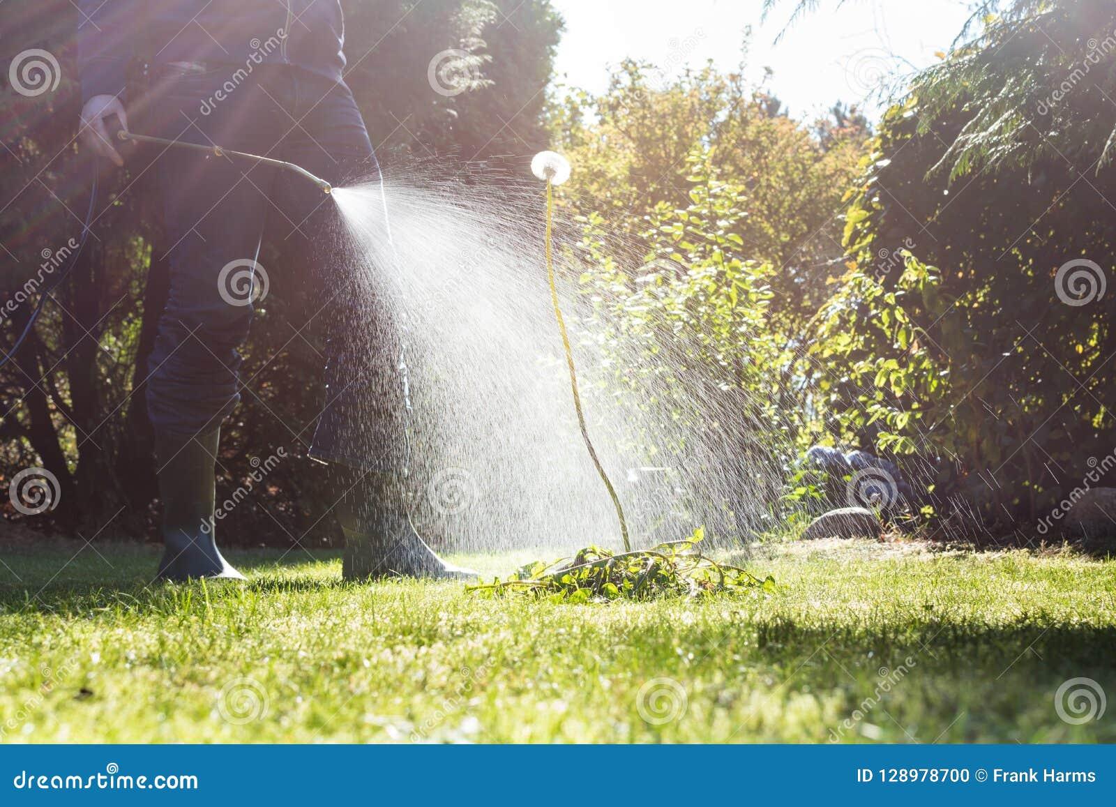 Ψεκάζοντας ζιζάνια στον κήπο