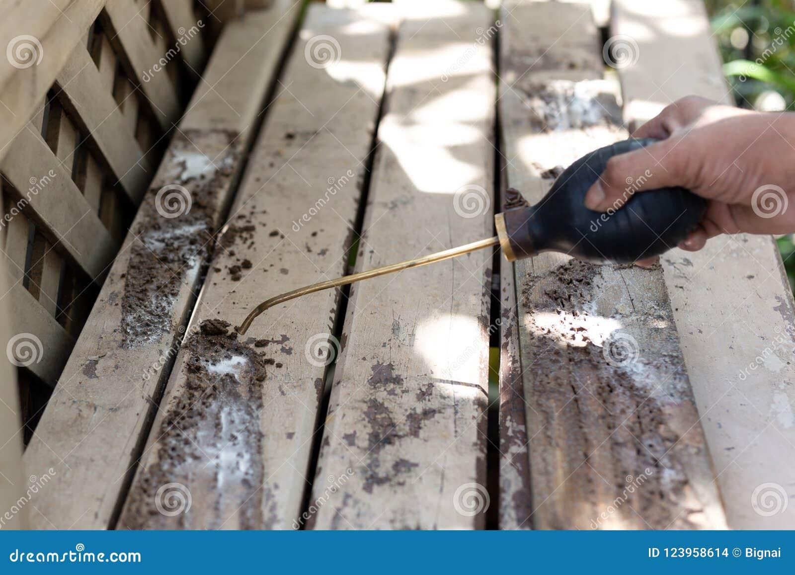 Ψεκάζοντας χημική ουσία εντομοκτόνου εργαζομένων για τον έλεγχο παρασίτων τερμιτών στην ξύλινη γέφυρα