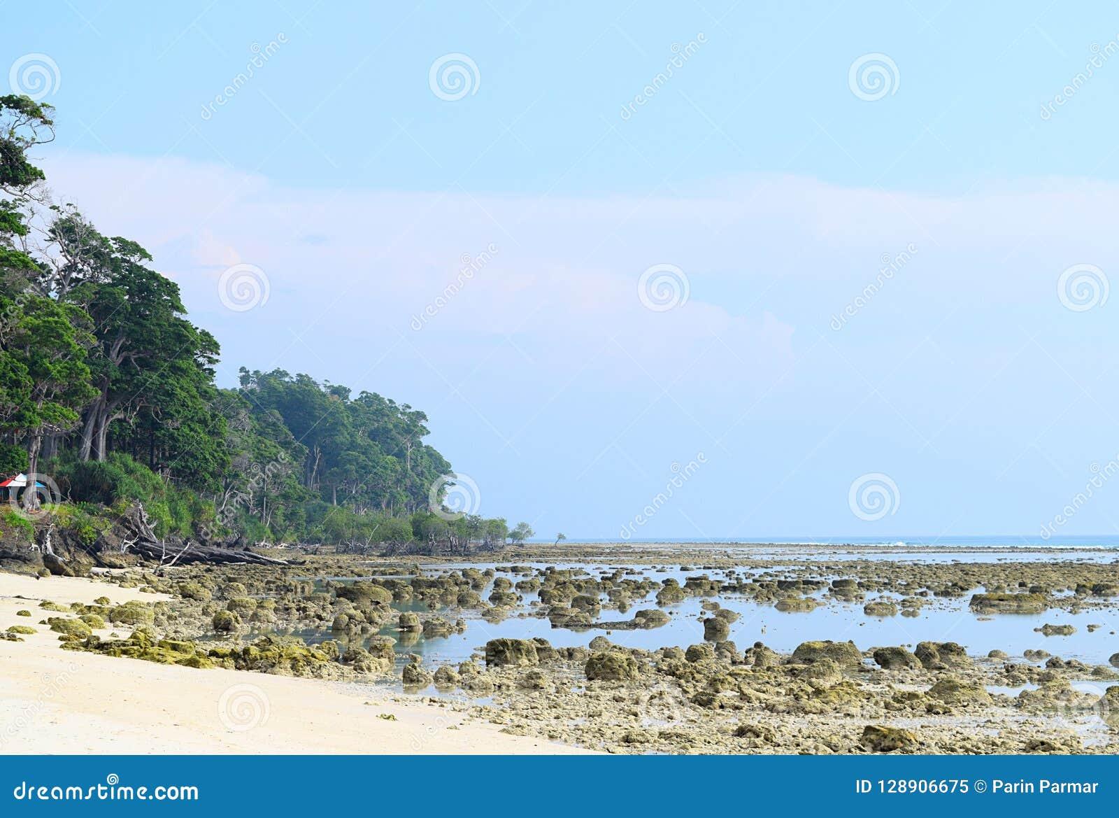 Ψηλά δέντρα, κυανό θαλάσσιο νερό, δύσκολη και αμμώδης παλιή παραλία, και σαφής μπλε ουρανός - σημείο ηλιοβασιλέματος, Laxmanpur,