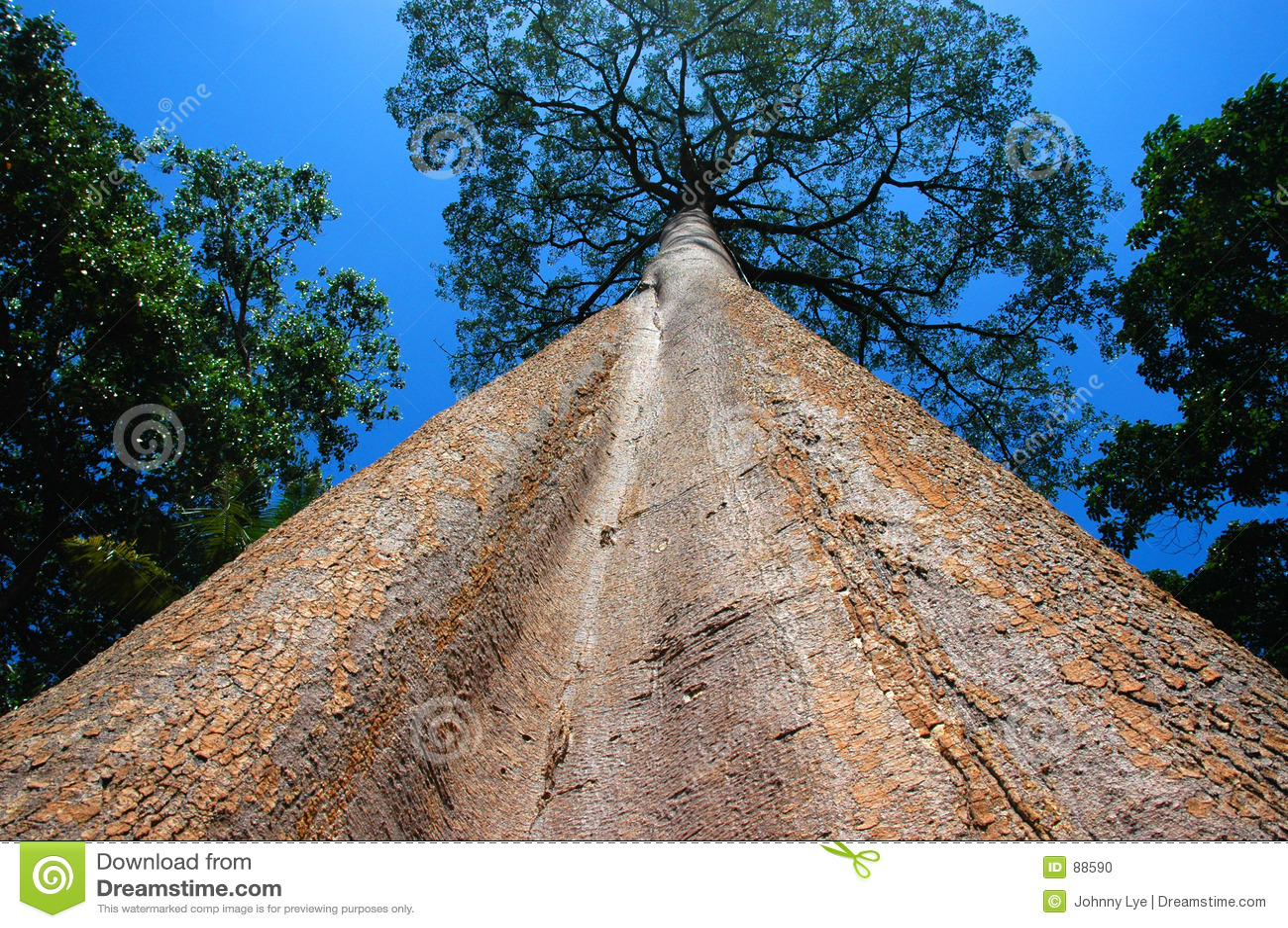 ψηλό δέντρο